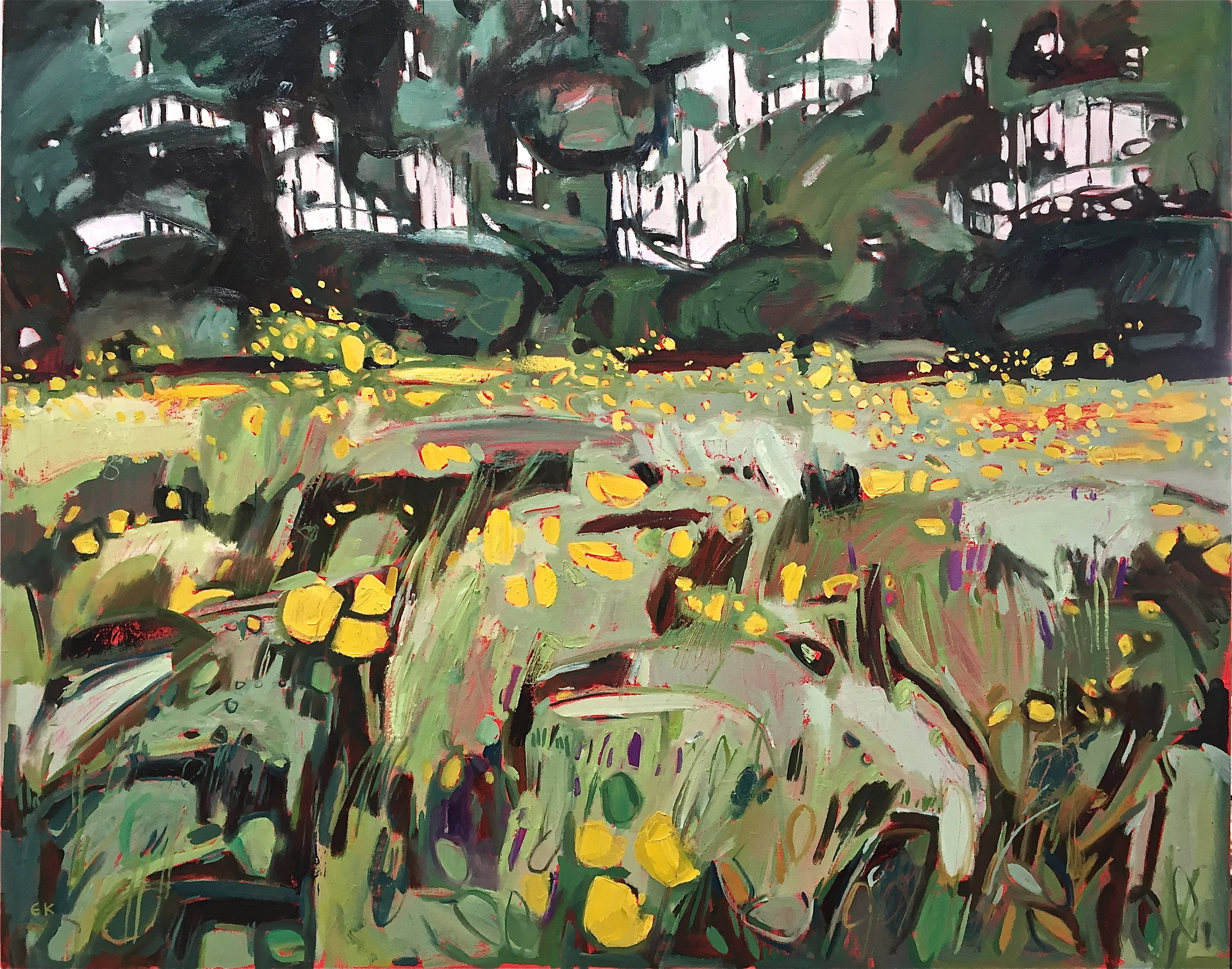 Buttercup Meadow at Grandpont, Oxford