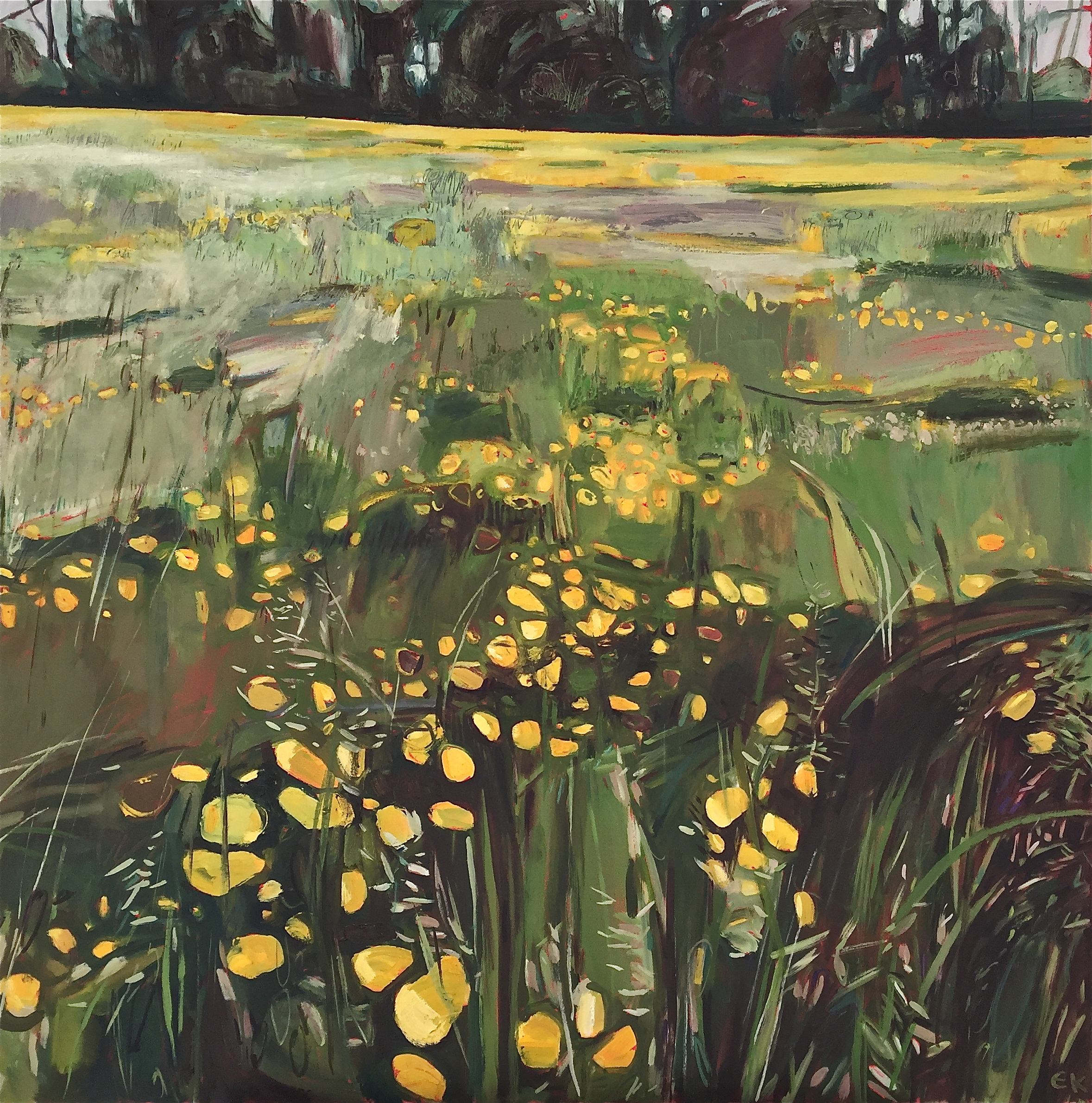 Buttercup Meadow along Binsey Lane, Oxford ≈