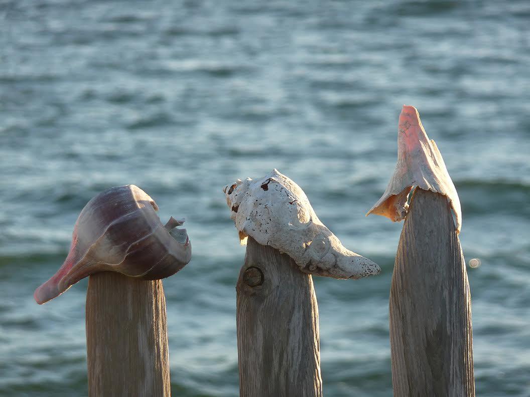 """Three Shells"" by Heather MacKenzie"