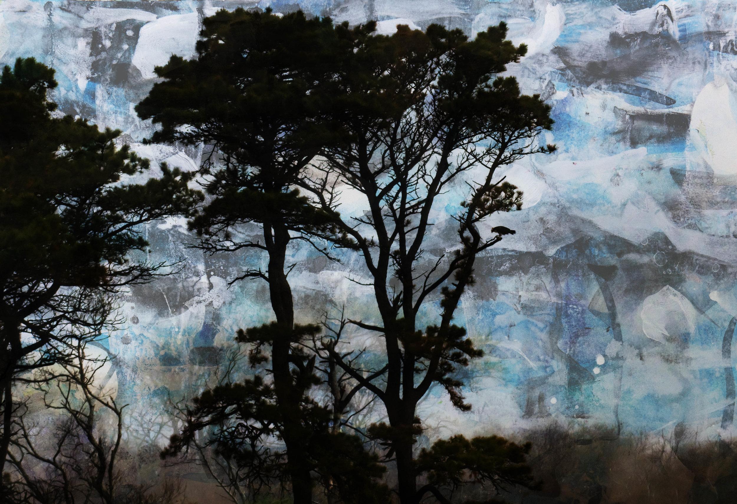 Pine with Osprey, Nantucket