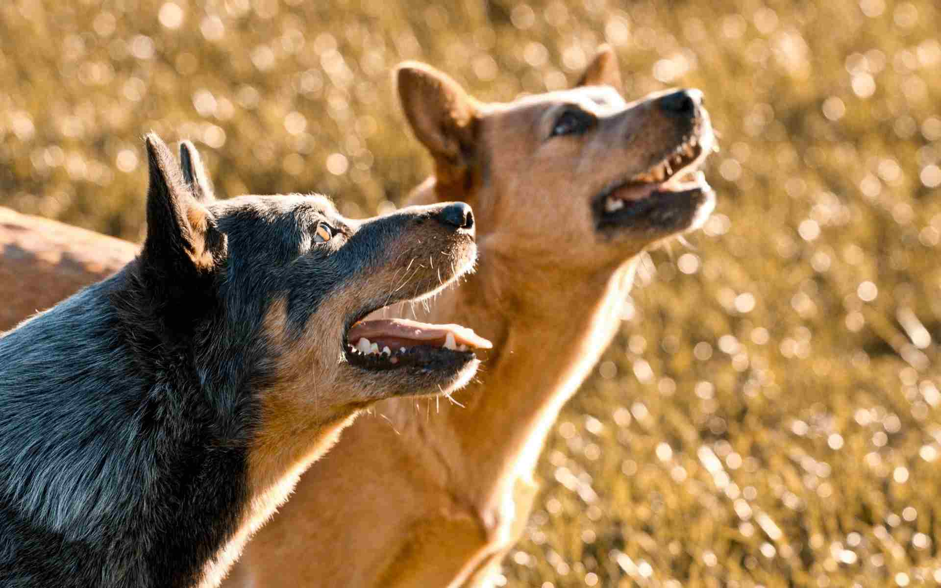 dogs-nature-background.jpg