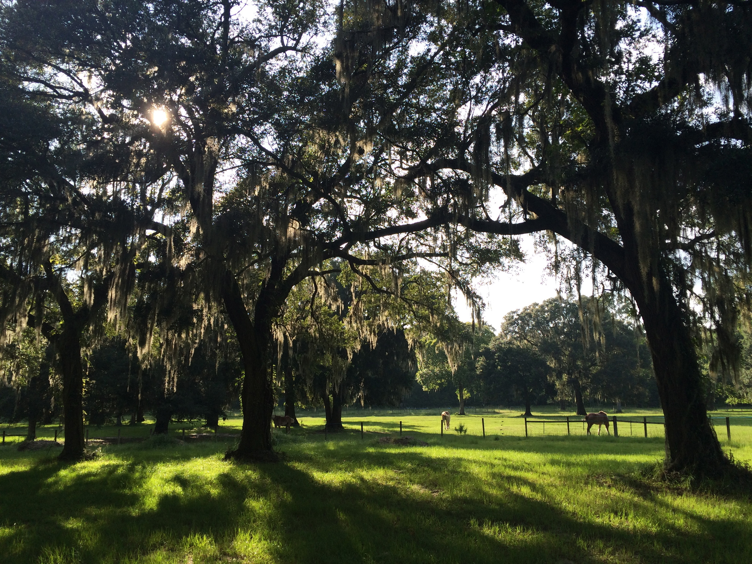 A magical spot on John's Island, SC - accessible by horseback.