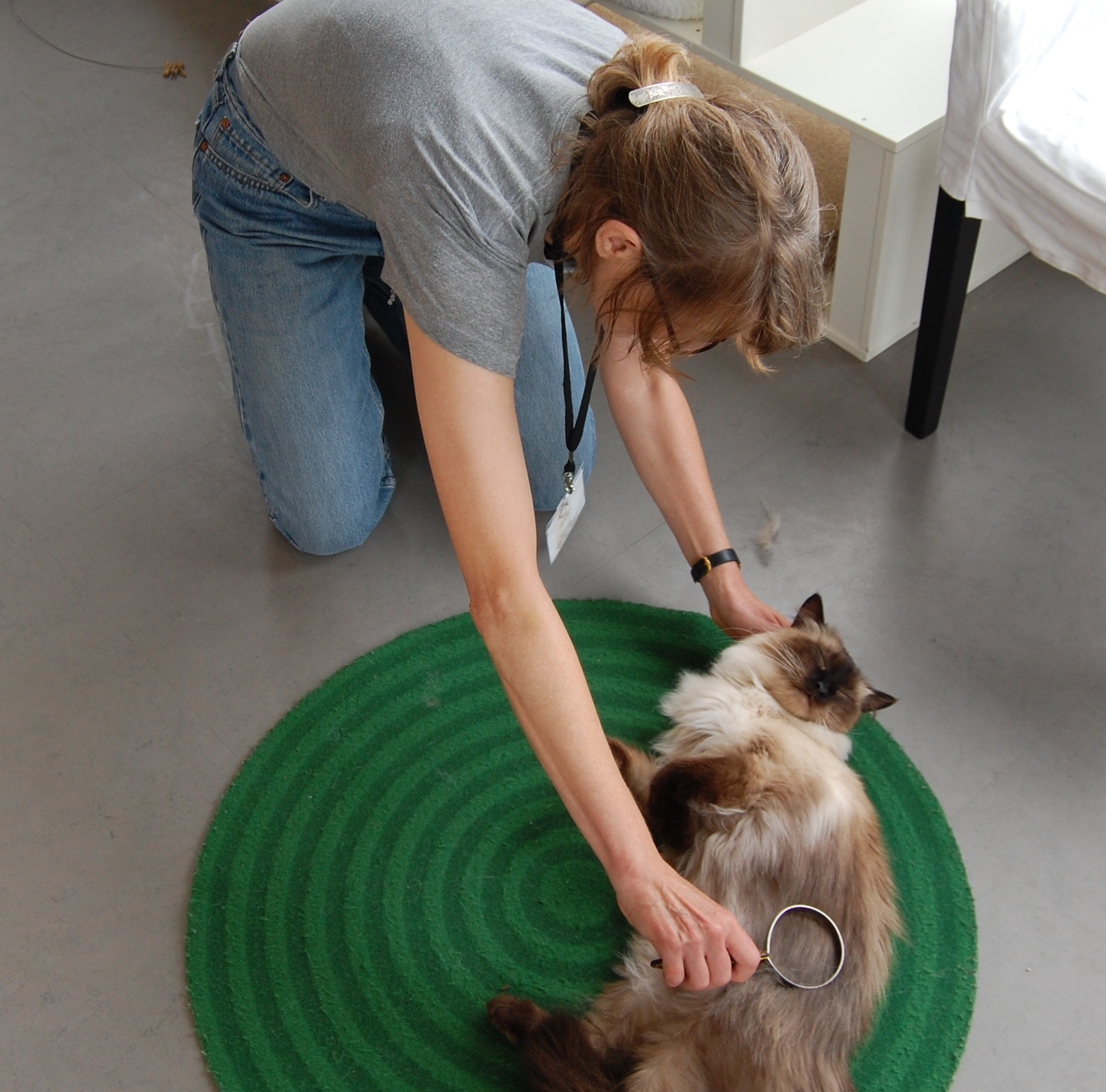 Gina gives fluffy cat, Sinatra, a brushing in the Cat Zone