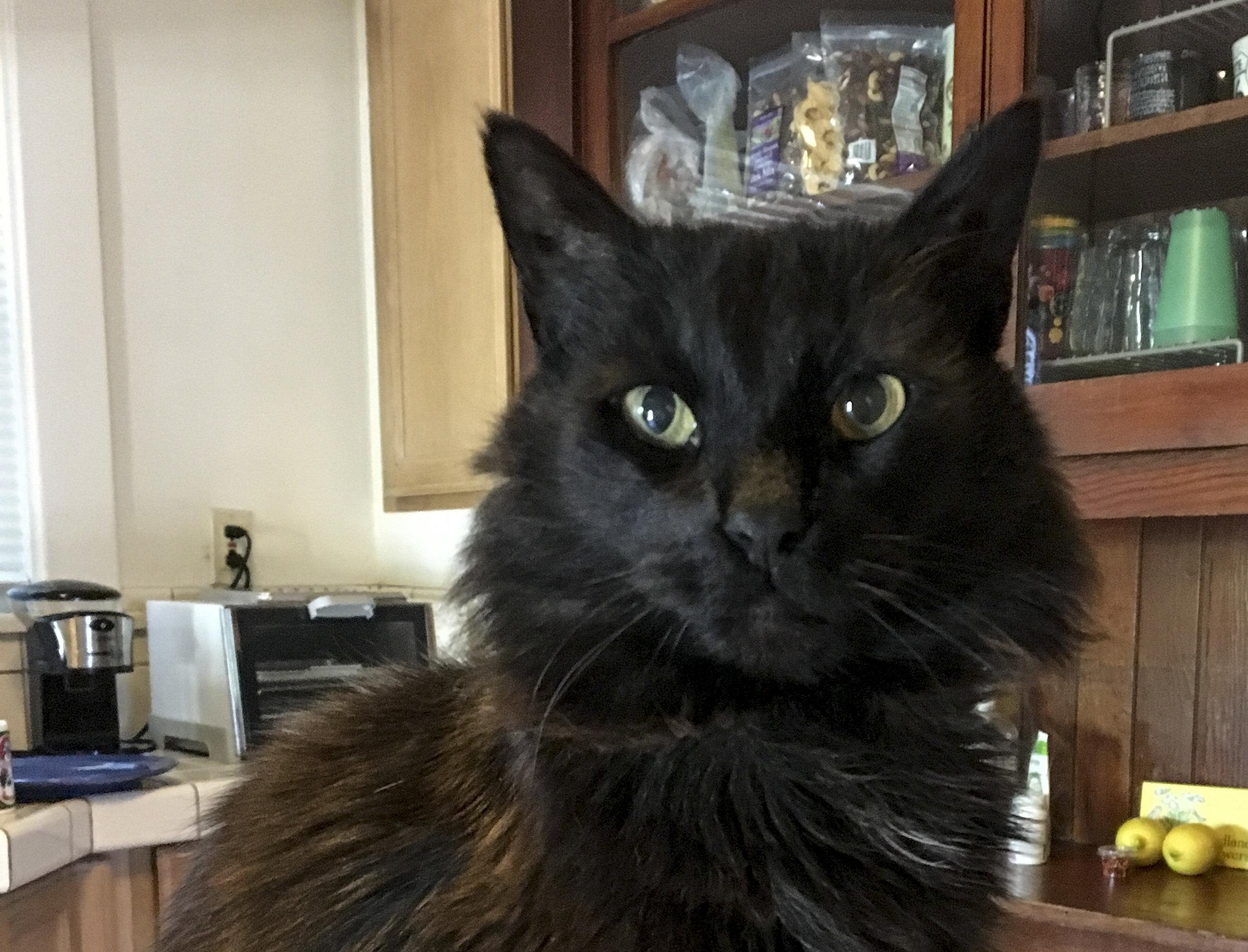 Bastille-black-cat-cattown-senior