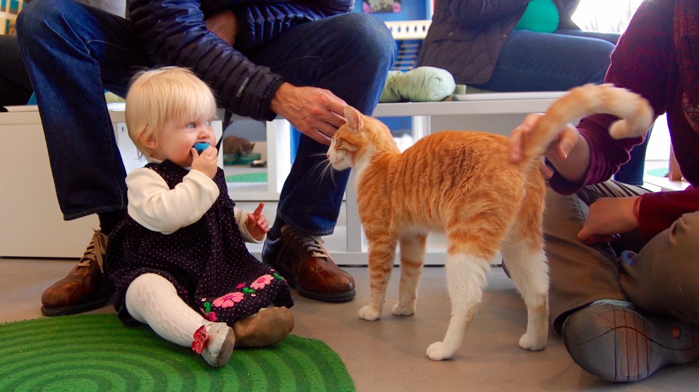 kids_cats_adopt_cattown.jpg