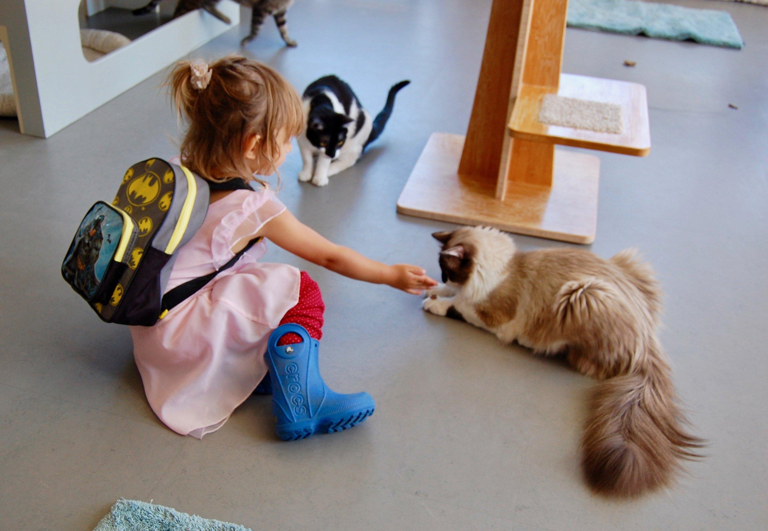 kid_cats_adopt_cattown_alaska_ranger.jpg