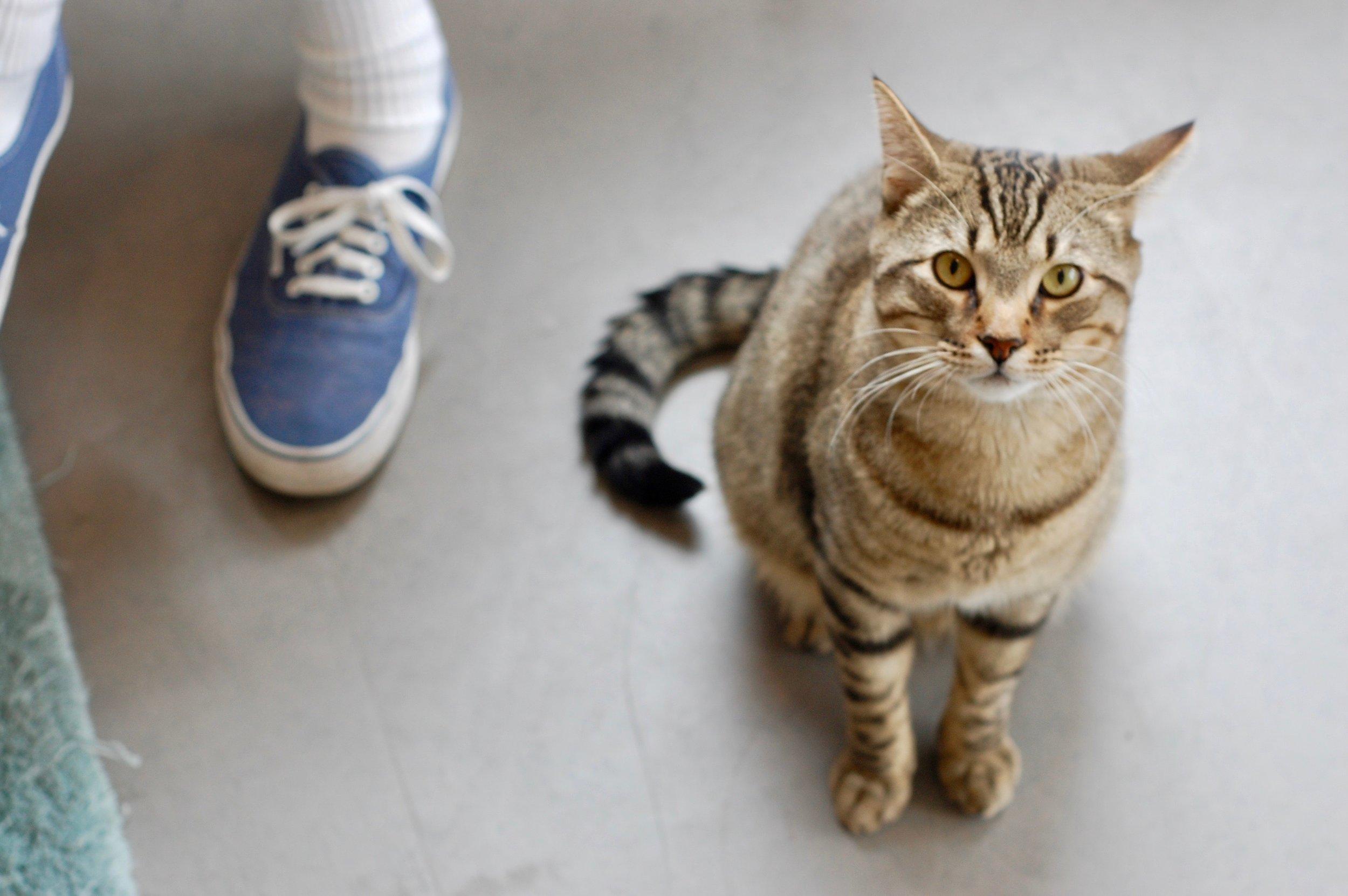treat_undersocialized_catzone_cattown.jpg