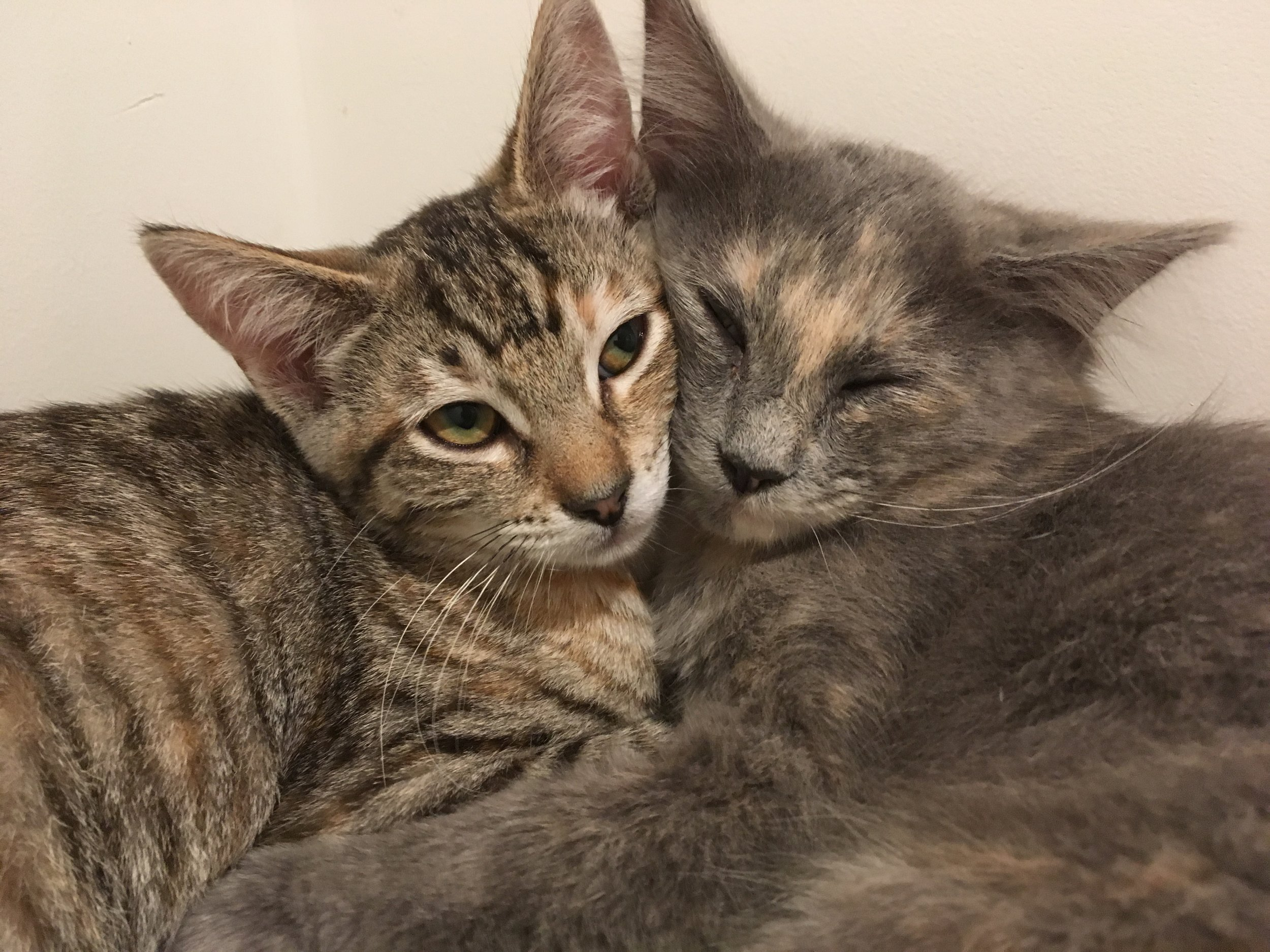 Sister love - Oak (left) and Leaf love cuddling. They are 4-month-old girls.