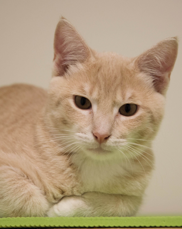 MANGO Adopted 9/2