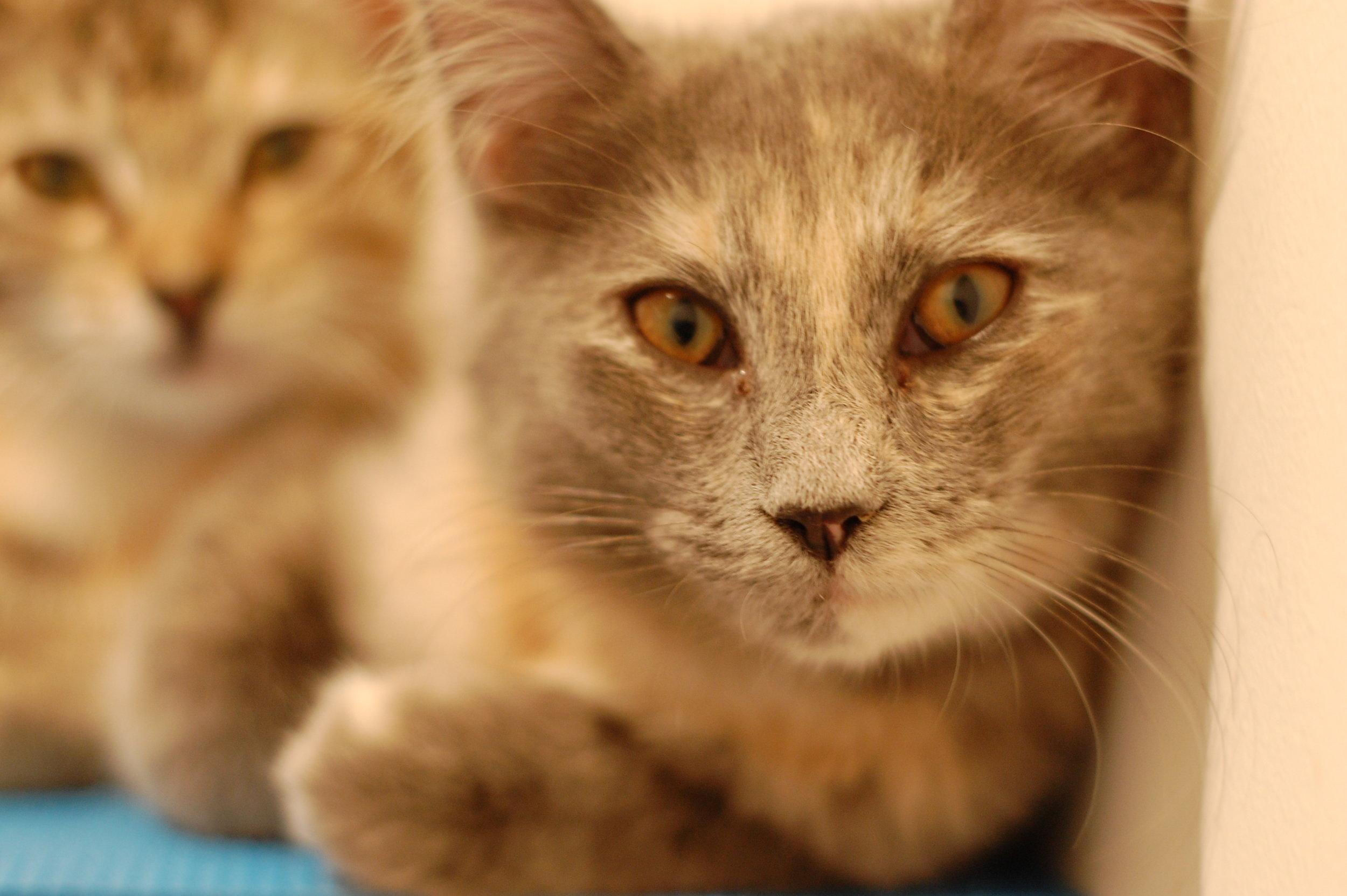 LEAF Adopted 9/8
