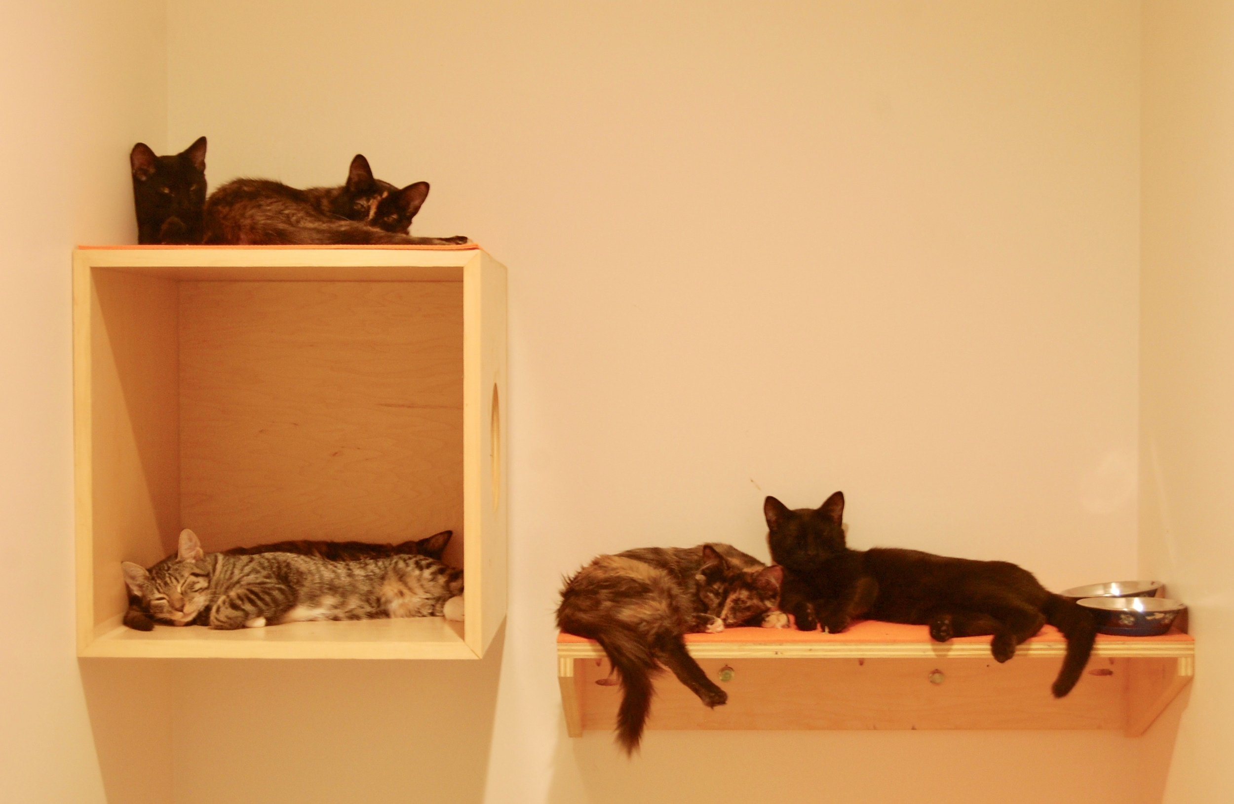 Some of kittens take a nap on in their studio after socializing with volunteers.
