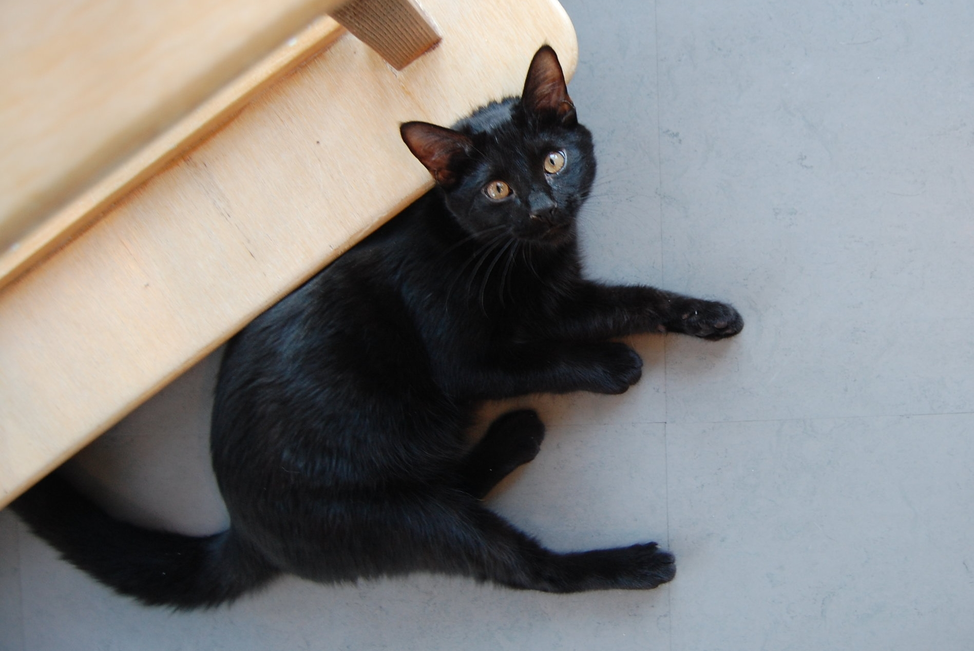 Cat Town alum, Clifford, just before heading to his new home.