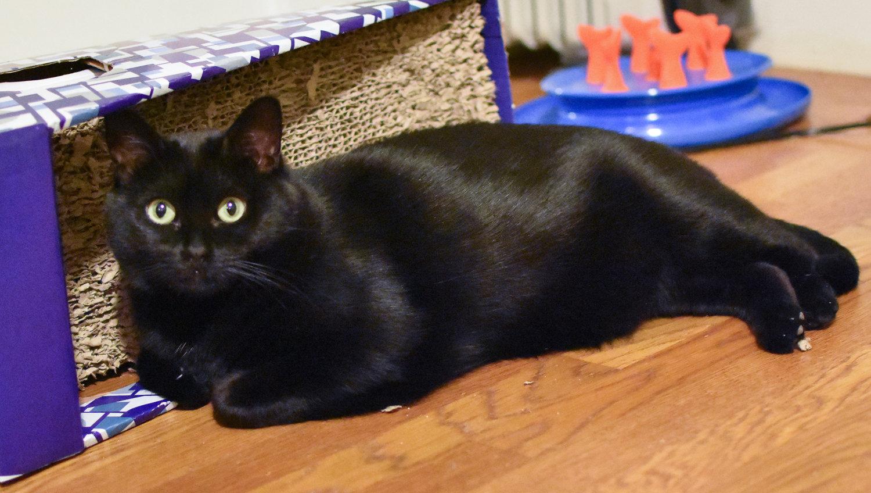 Debunking Myths About Black Cats Pt 2 Debunking Myths About Black Cats Pt 2