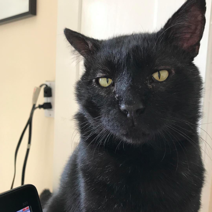 Cat Town alum, Mr. Adorable comes with lots of personality and his adopters are great at showing it on his Instagram @mister_adorable.