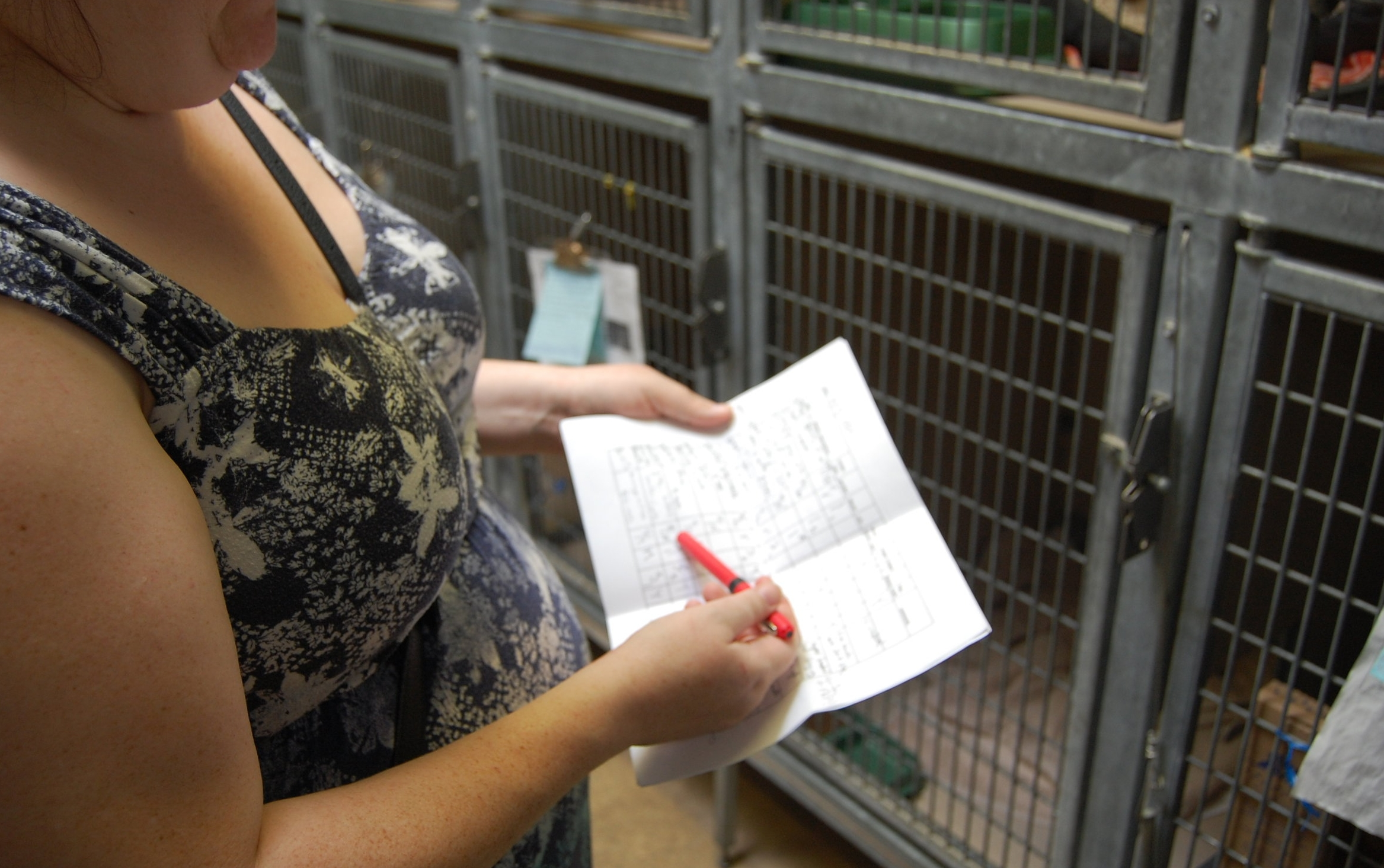 Marie runs through her list of FKPs at Oakland Animal Services.