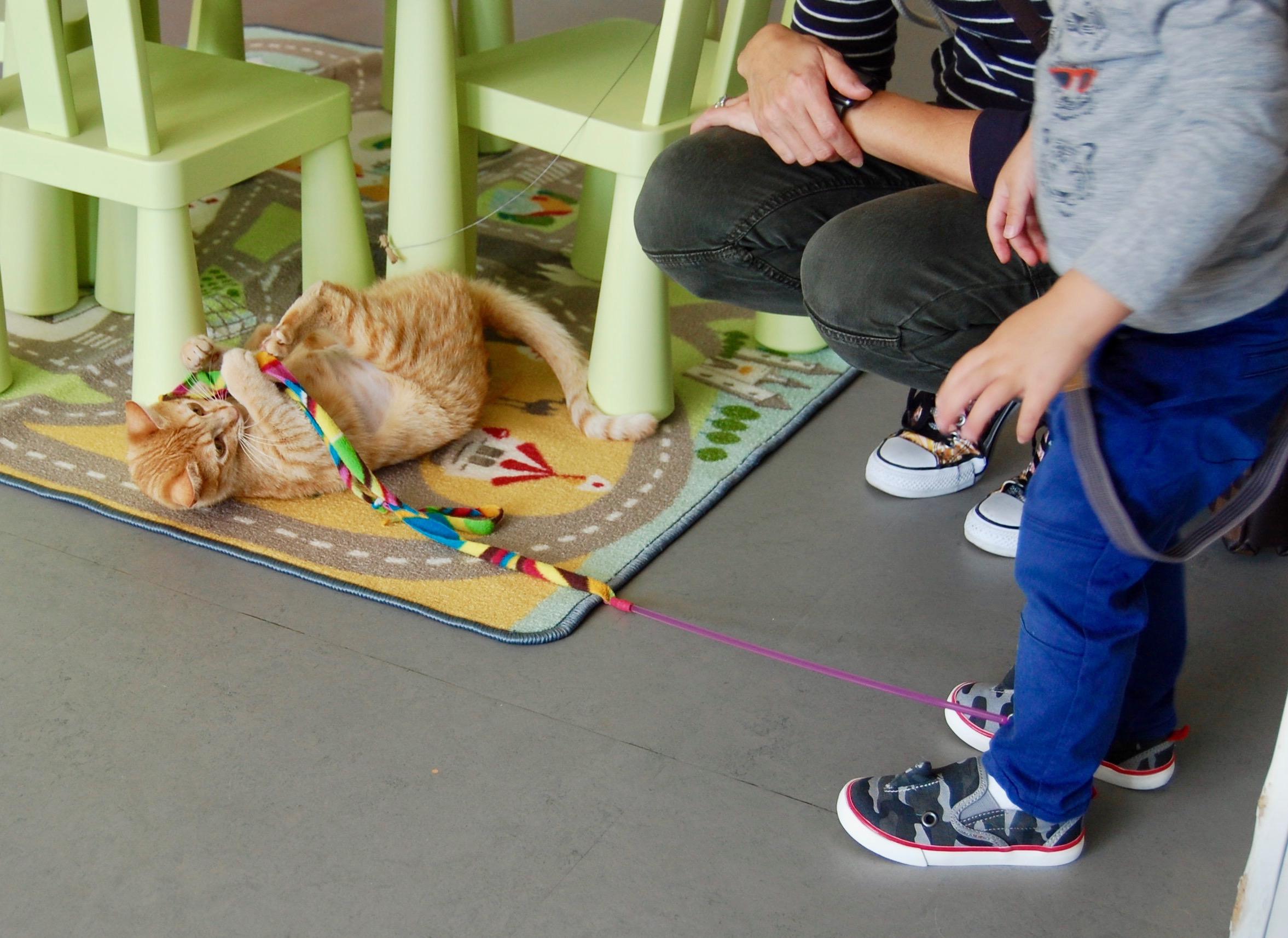 Visit Cat Town