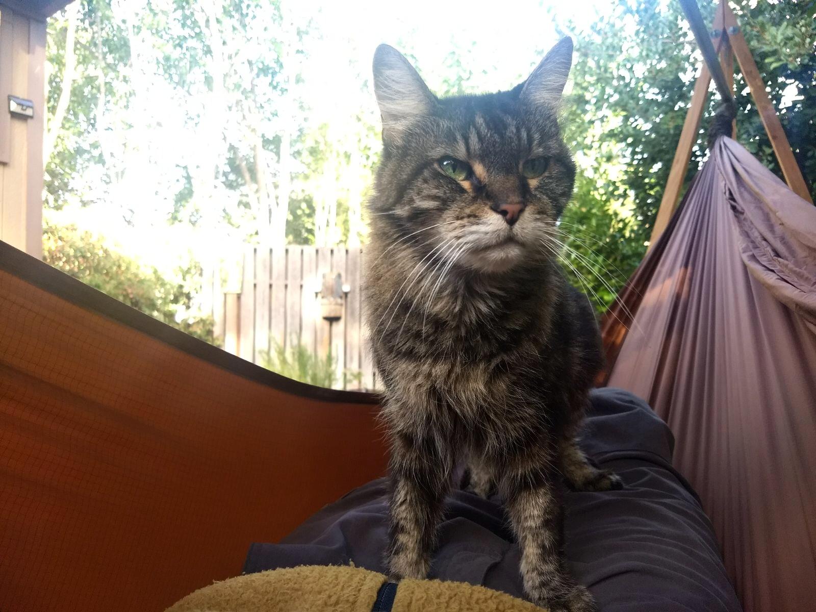 Meeka, adopted December 2016