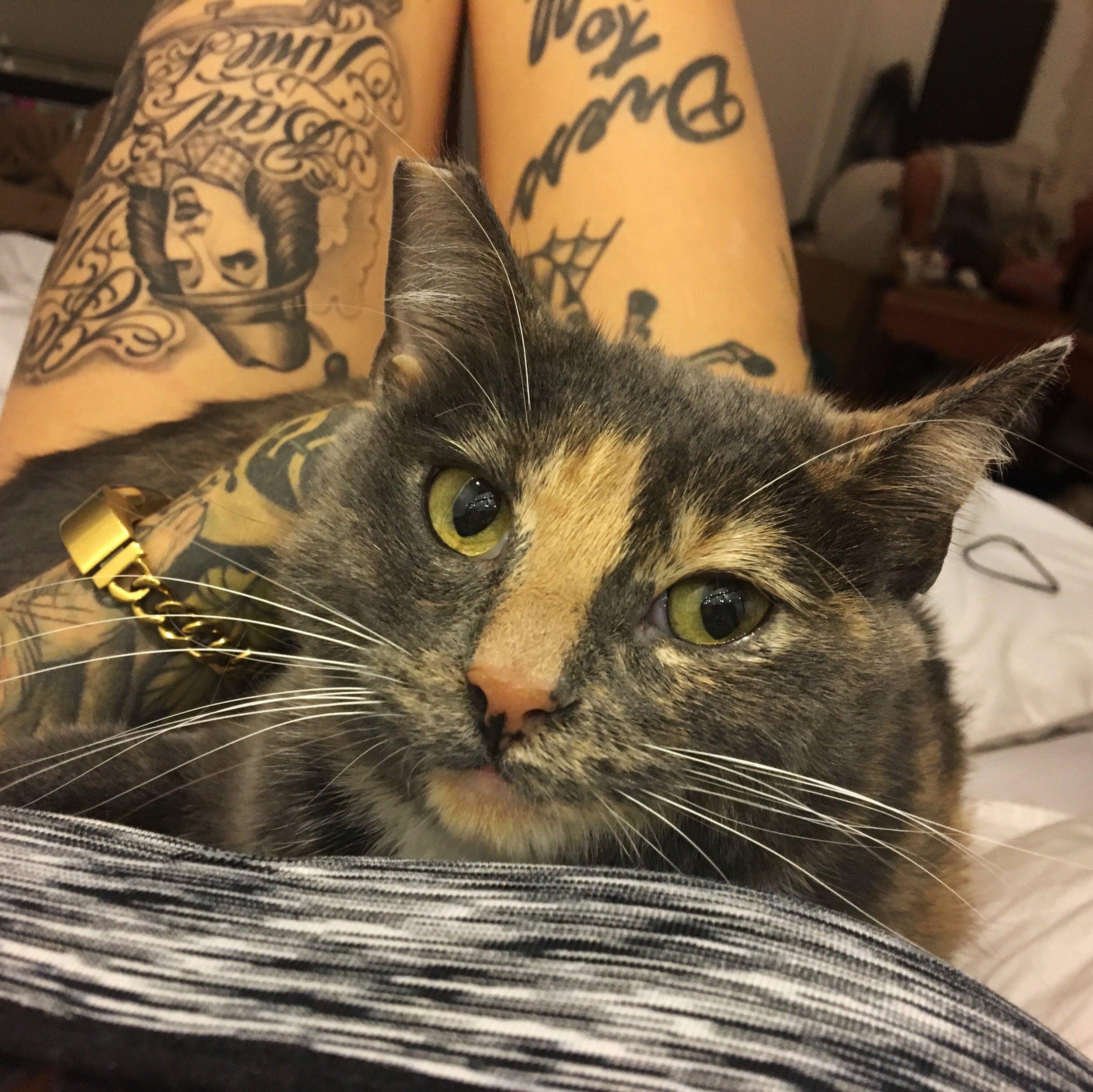 Kelda, adopted September 2017