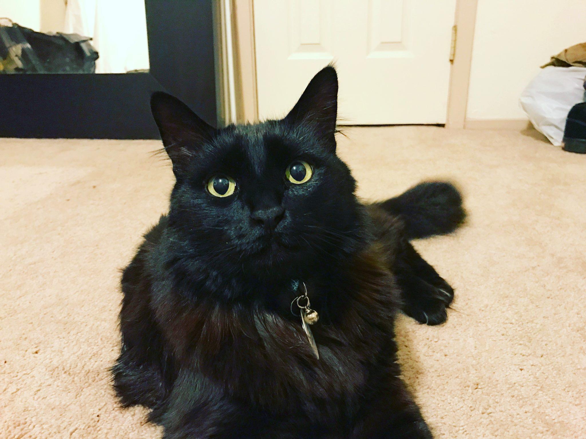 Marty (FKA Herbert), adopted October 2015