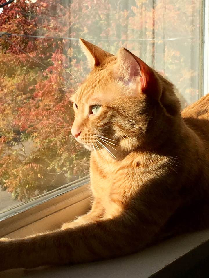 Rose, (FKA Rizzo), adopted October 2015