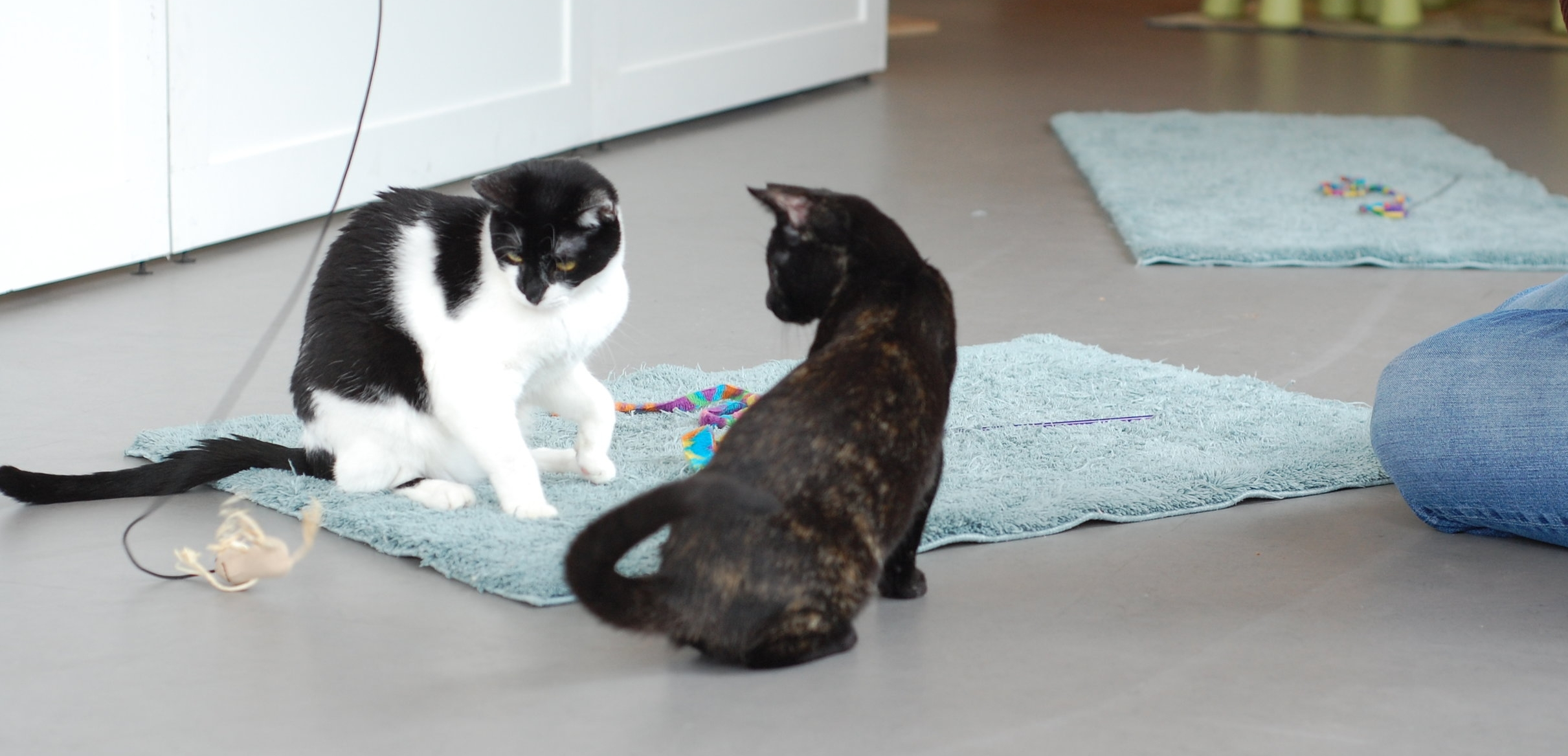 Alaska and Autumn playing with a visitor a few weeks back. Photo by Cathy Niland.