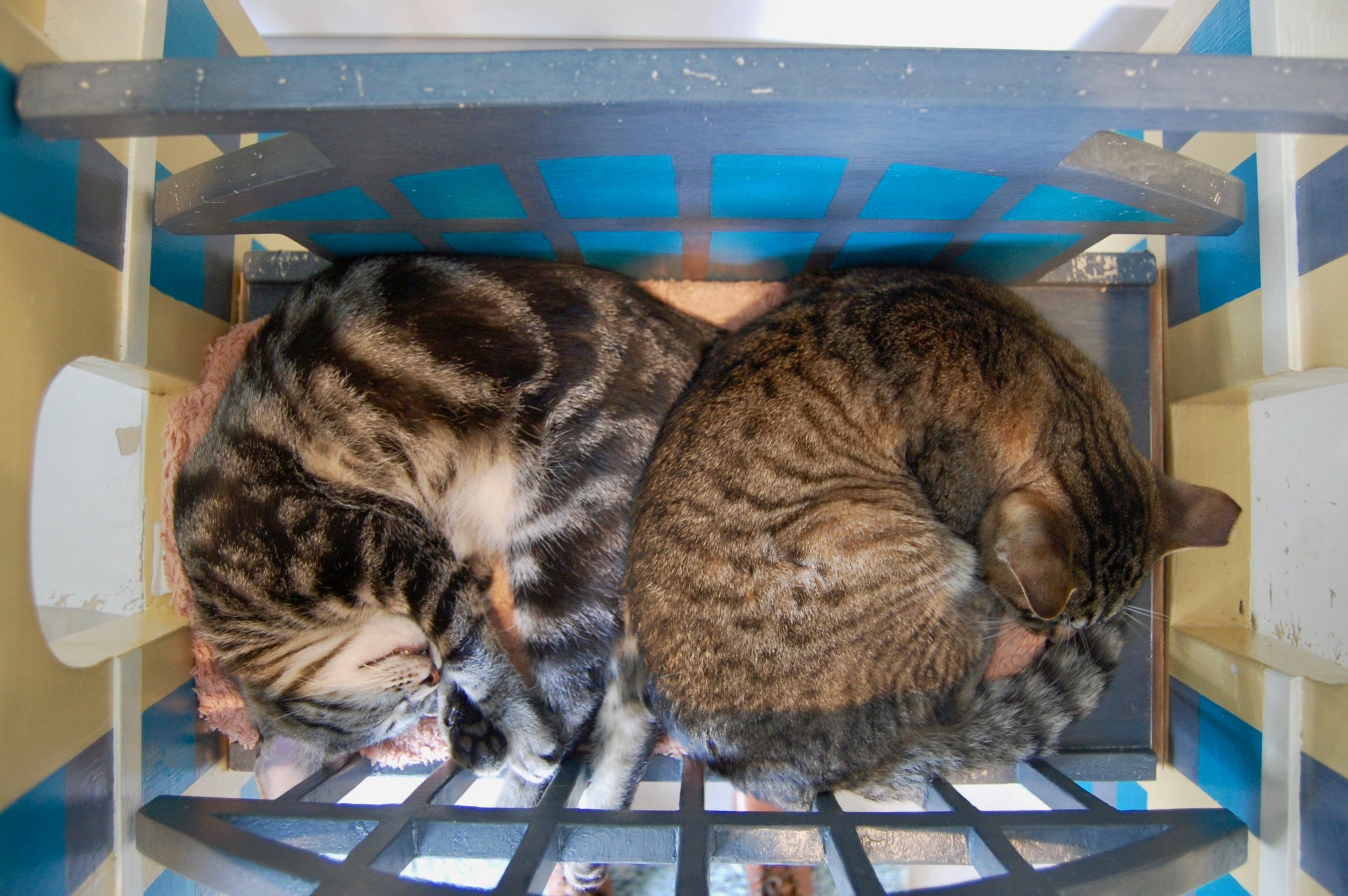 Merlin, right, cuddles up with another member of the Forgotten Kitten Project. Photo by Cathy Niland