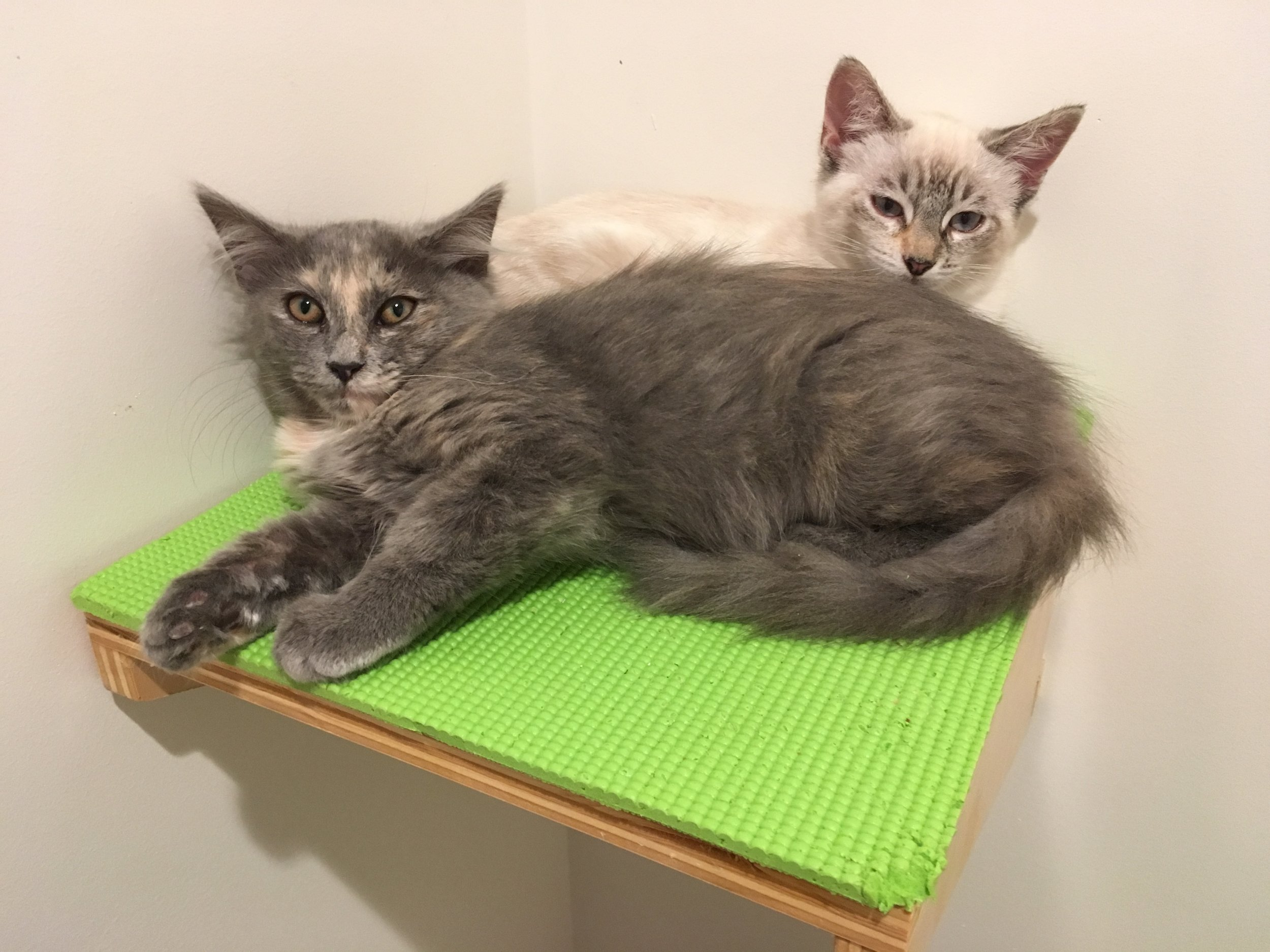 Leaf (front) and Aspen, cuddling in their studio before going home.