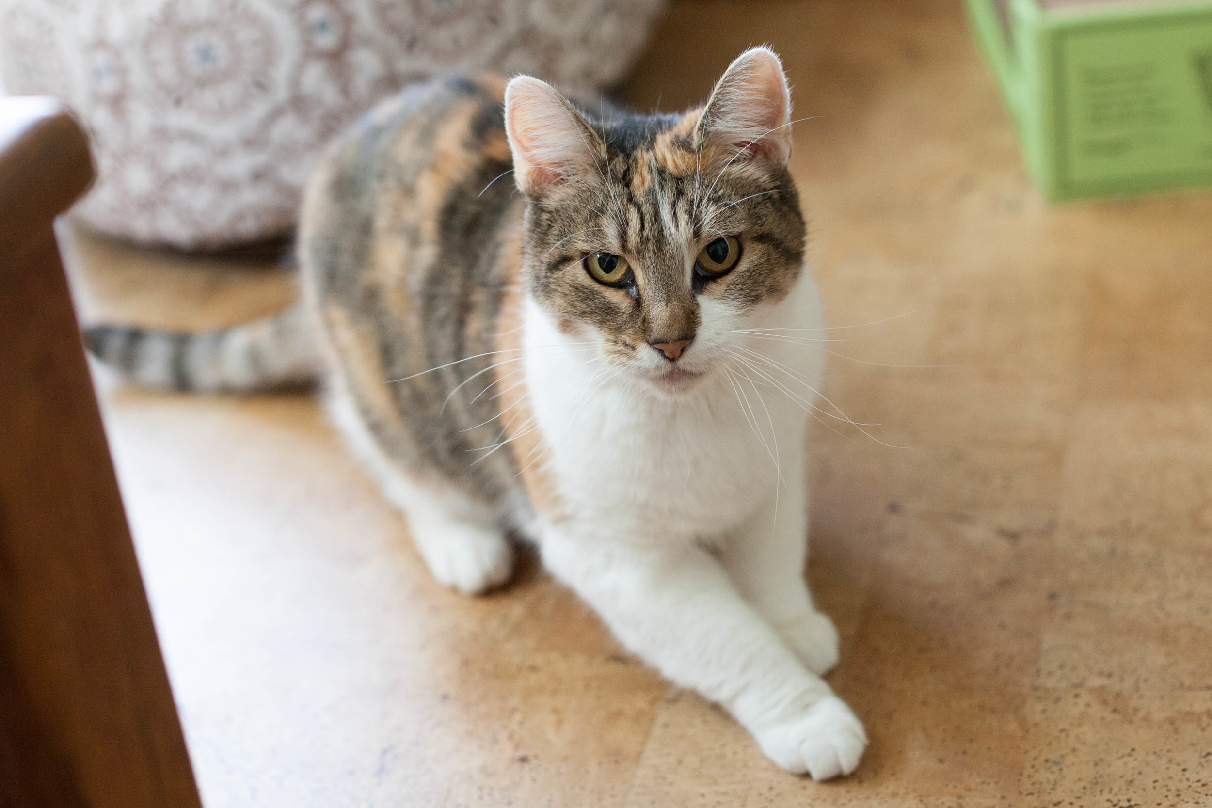 Cassie never lets her FIV+ status get in the way of living life to the fullest!