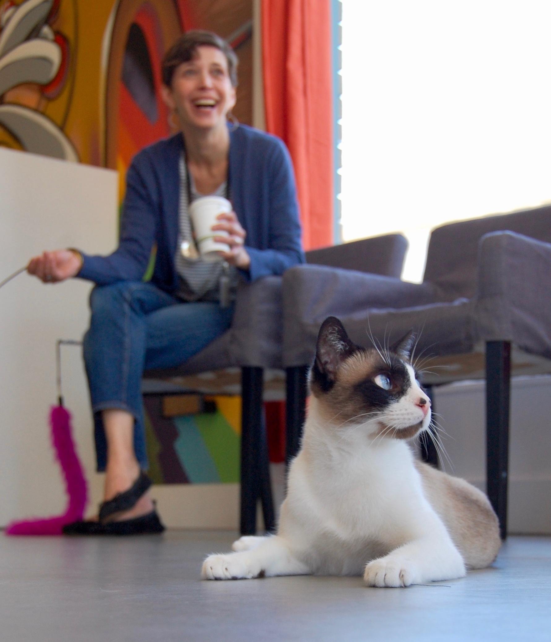 Emily cat town volunteer.jpg