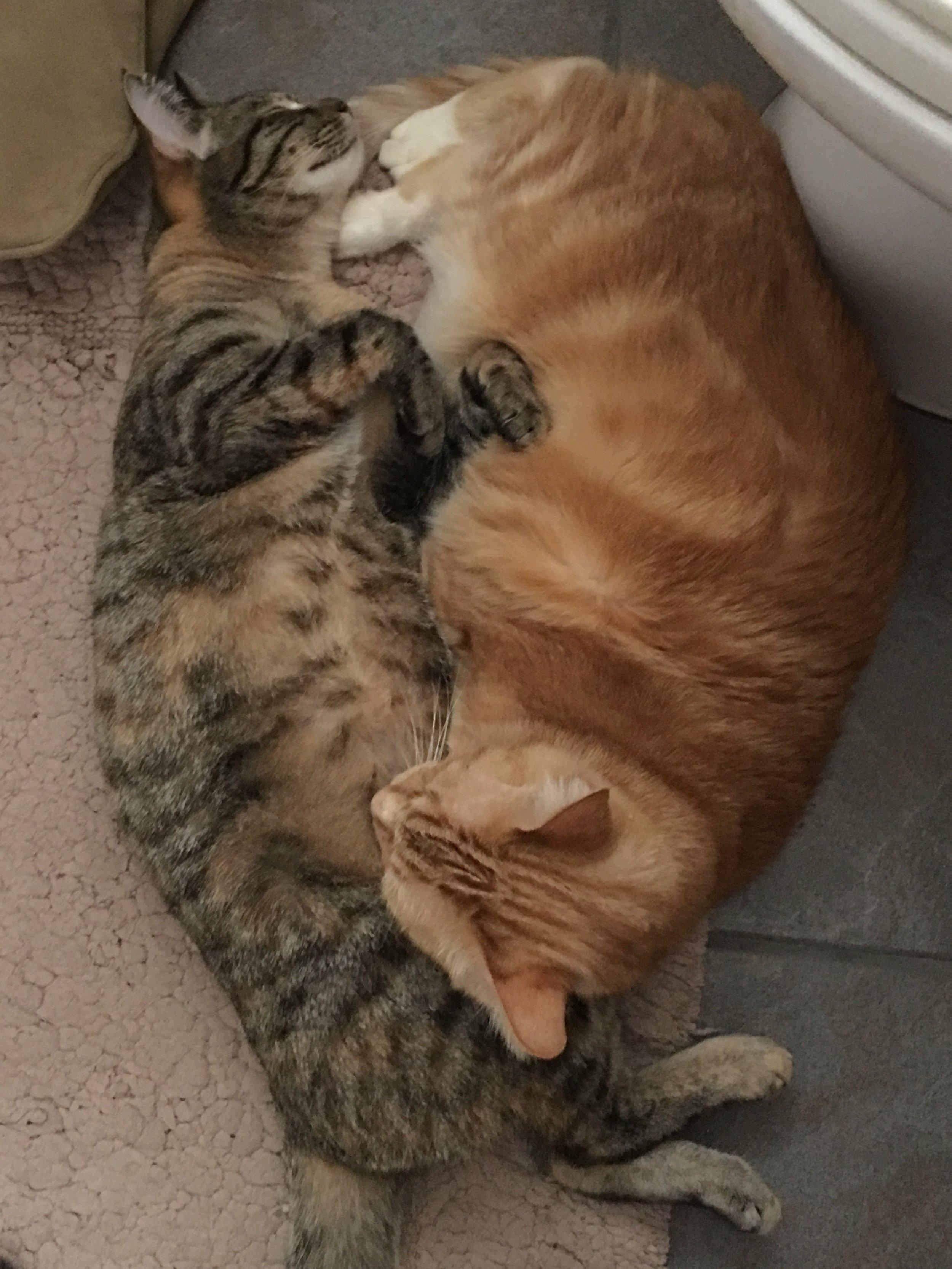 Joy (FKA Oak), adopted September 2017, and Kena (FKA Peaches), adopted December 2012