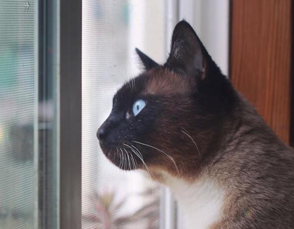 Cat Town alum, Atlas (FKA Simon) is full of personality! Follow his antics on Instagram @cat.atlas.