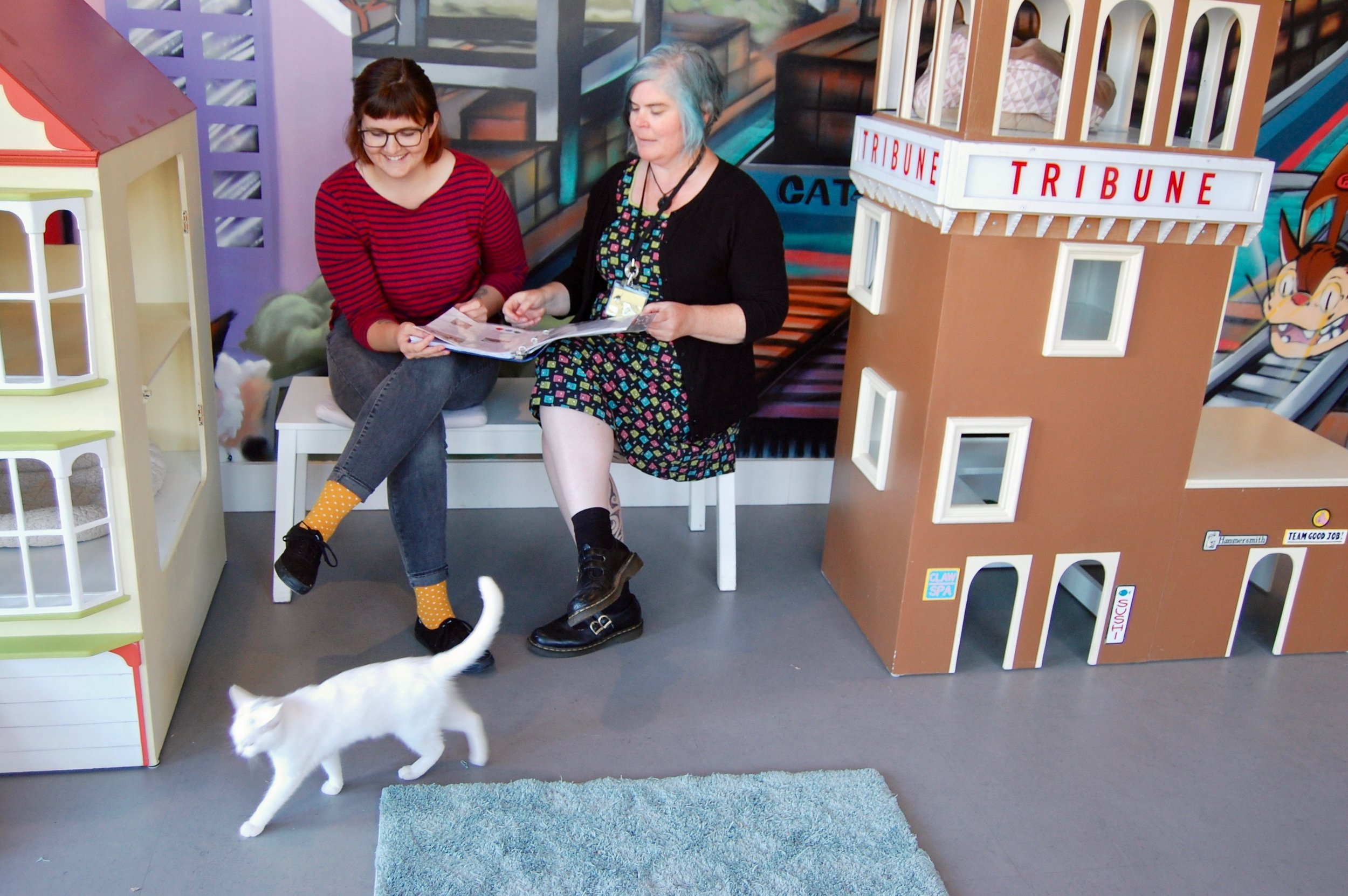 Maureen during a Cat Zone volunteer shift.