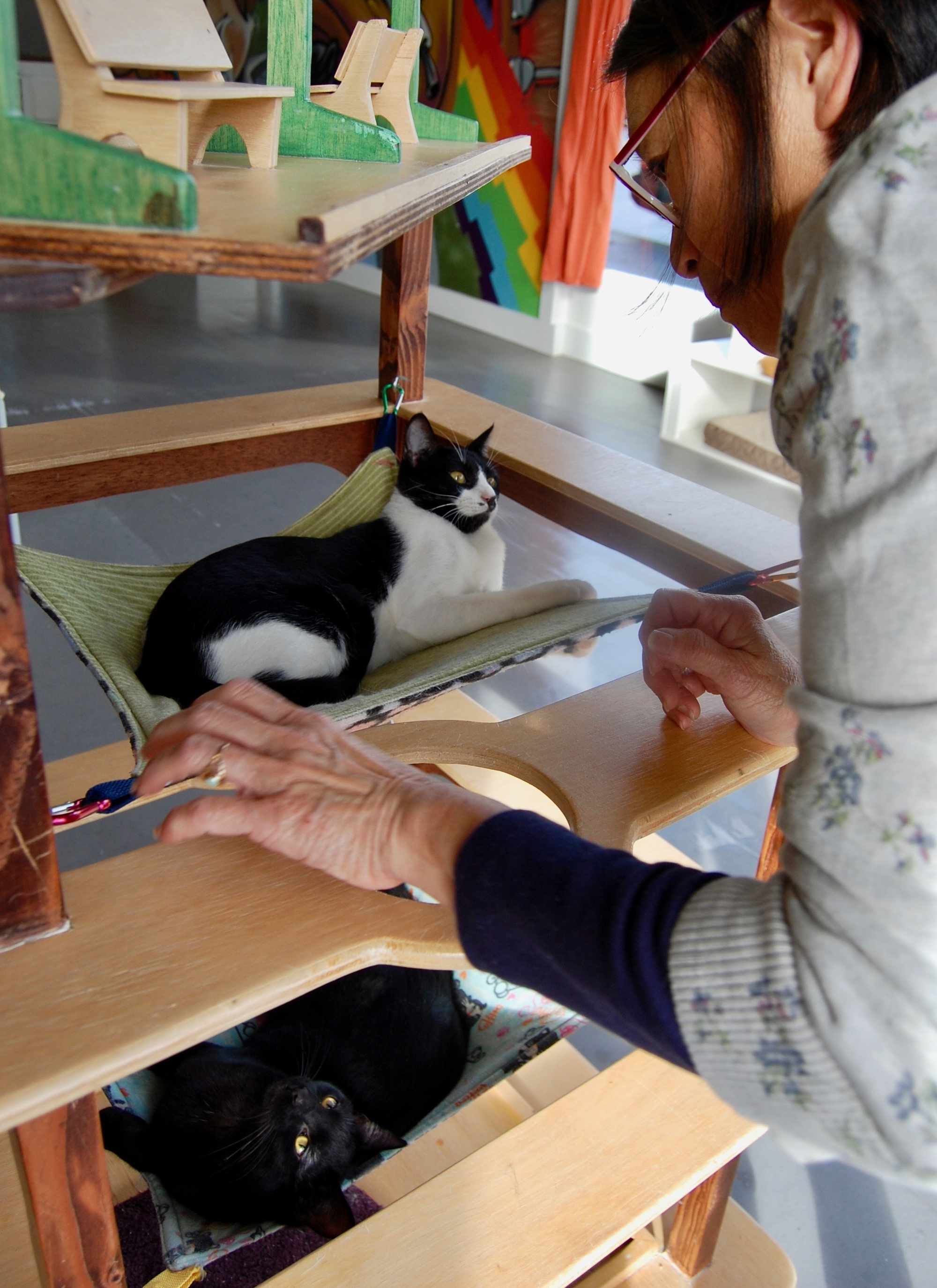 Mae helping some of our older shelter kittens socialize in our Adoption Center. Photo by Cathy Niland.