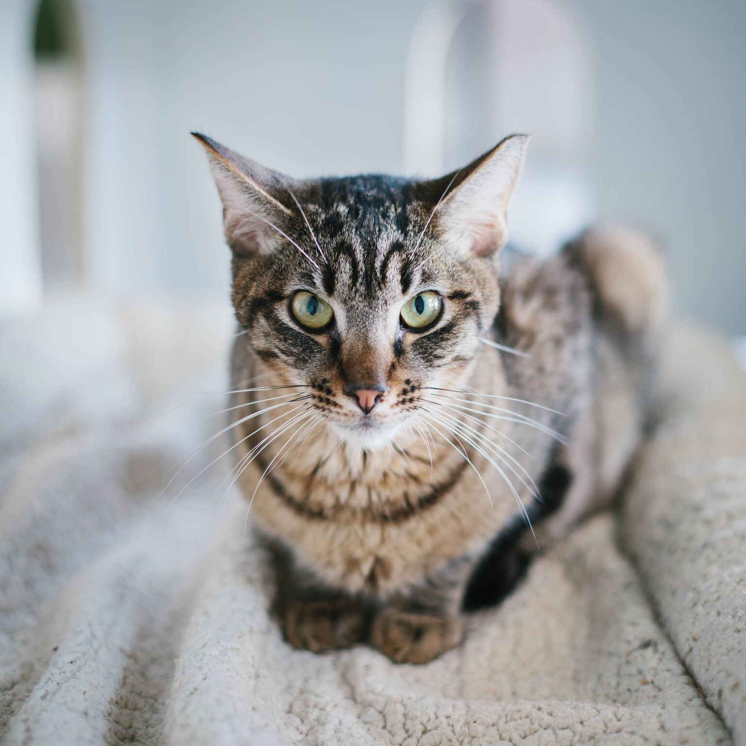 CAT6.jpeg