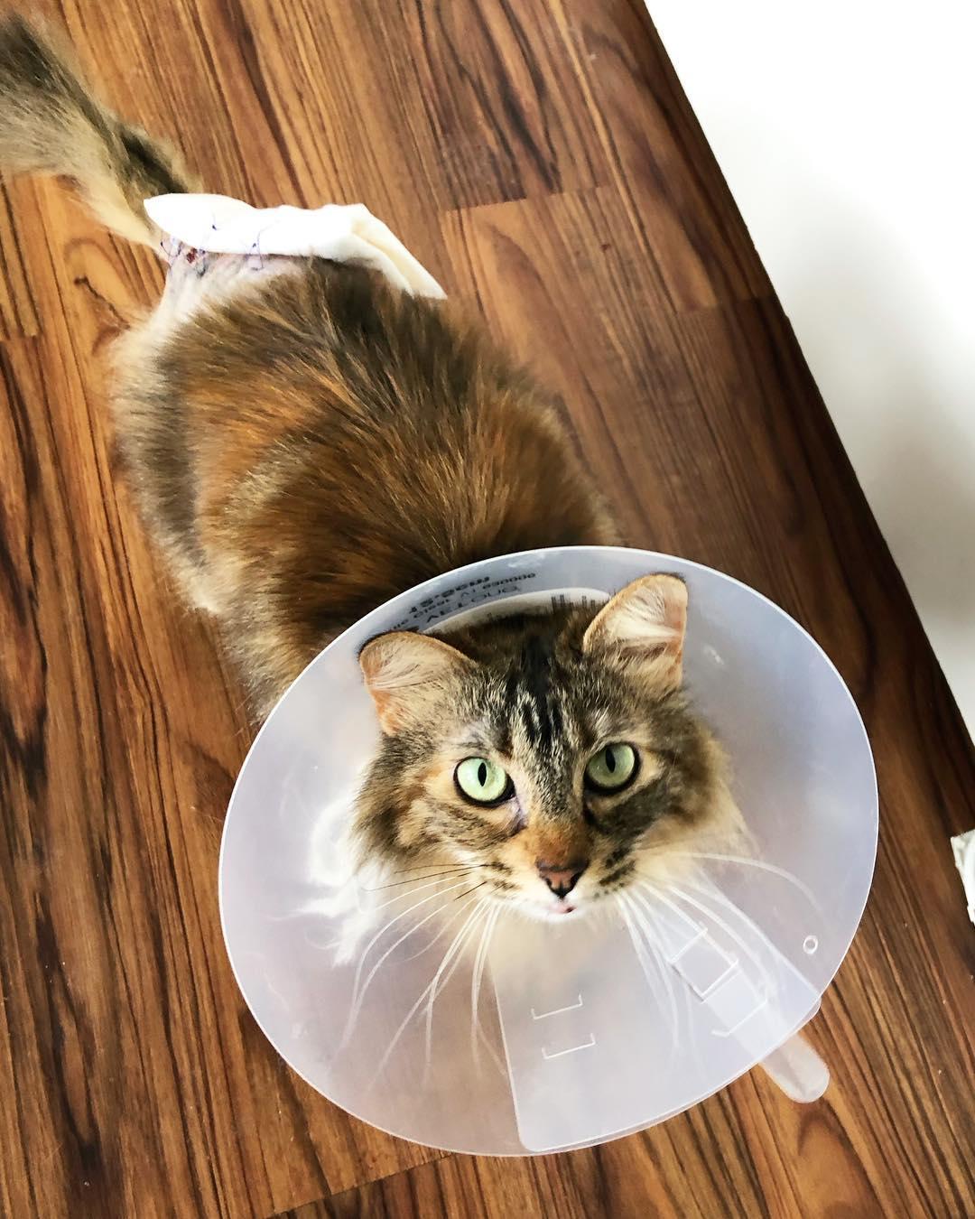 Tammy-butt-bandage.jpg
