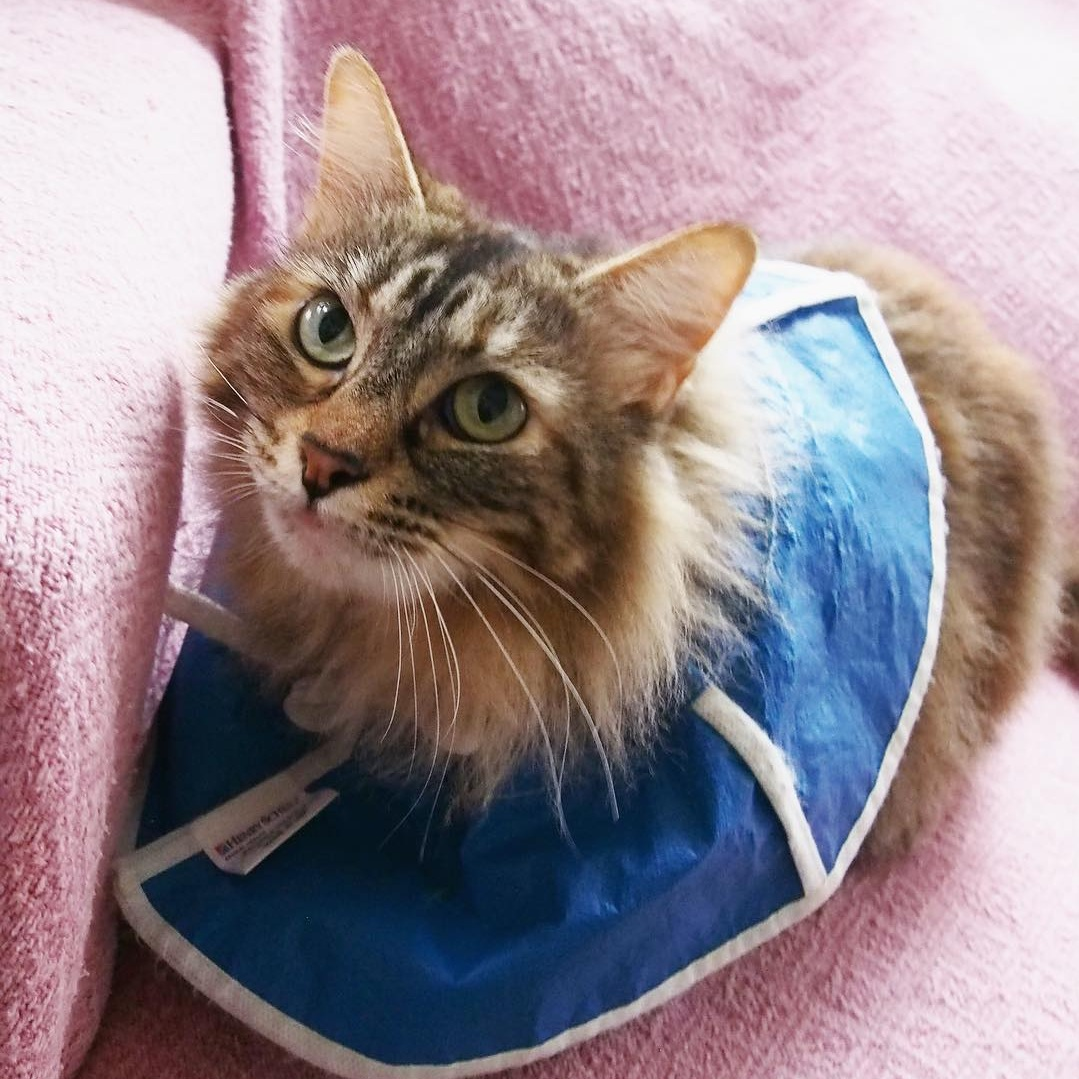 Tammy's injuries never slowed her down, thanks to speedy access to antibiotics, pain meds, and a loving foster home.