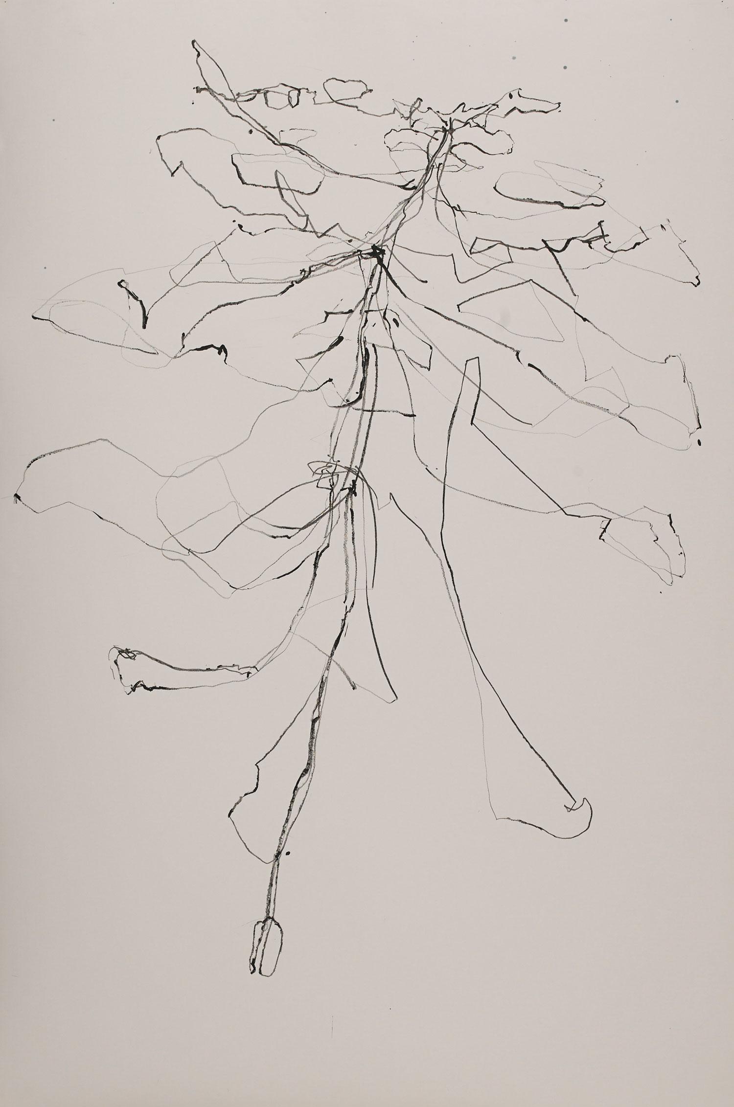"""CONUSPHILLIA  graphite on paper 60"""" x 36"""" 2015 SOLD"""