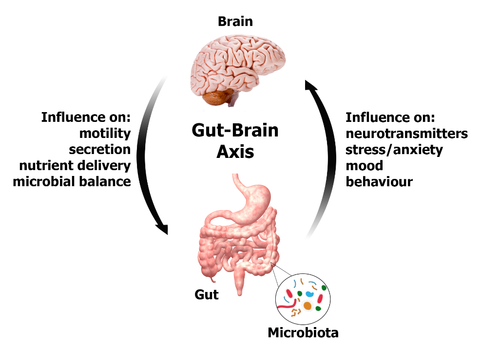 Breaking down the gut-brain connection - The Well Essentials