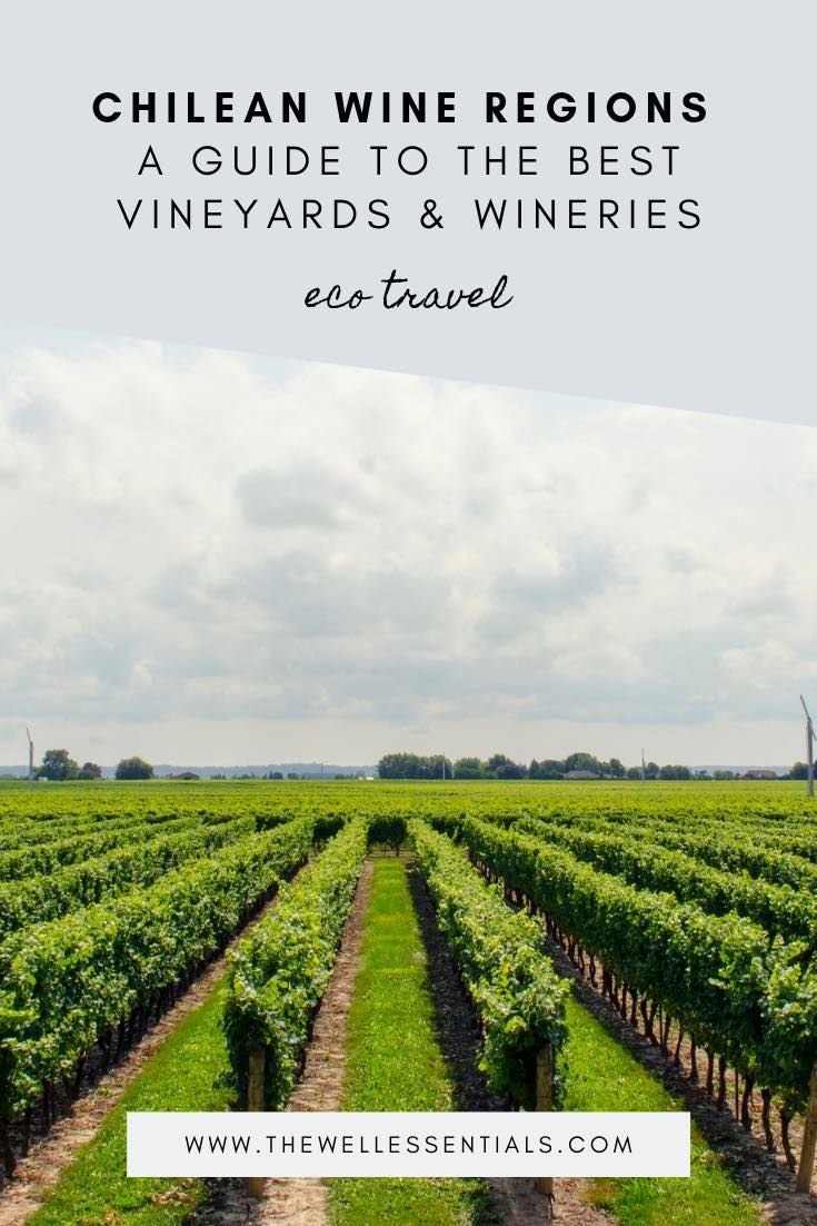Chilean Wine Regions: A Guide To The Best Vineyards & Wineries