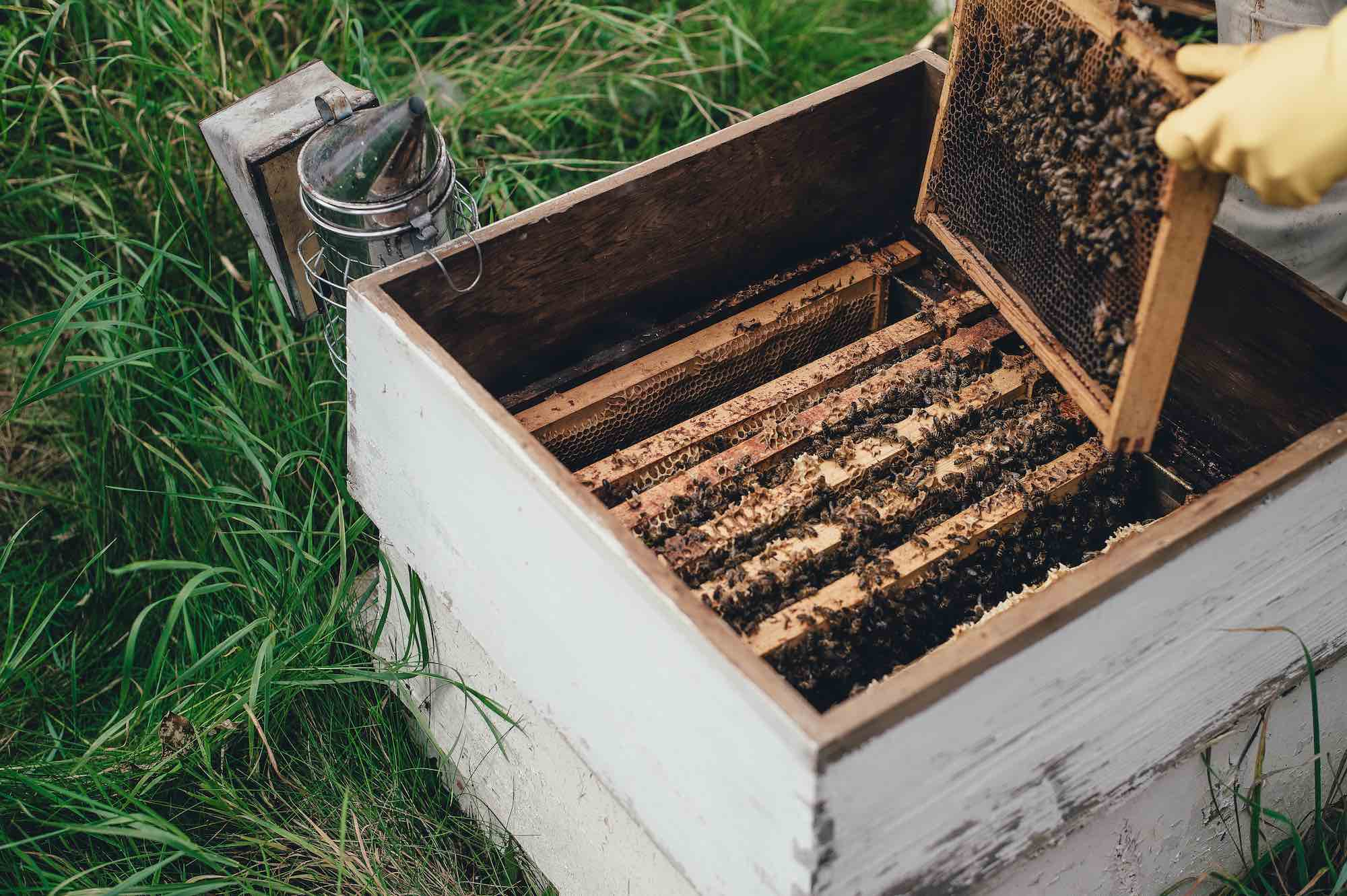 Why Are Bees Dying And How You Can Help To Save The Bees