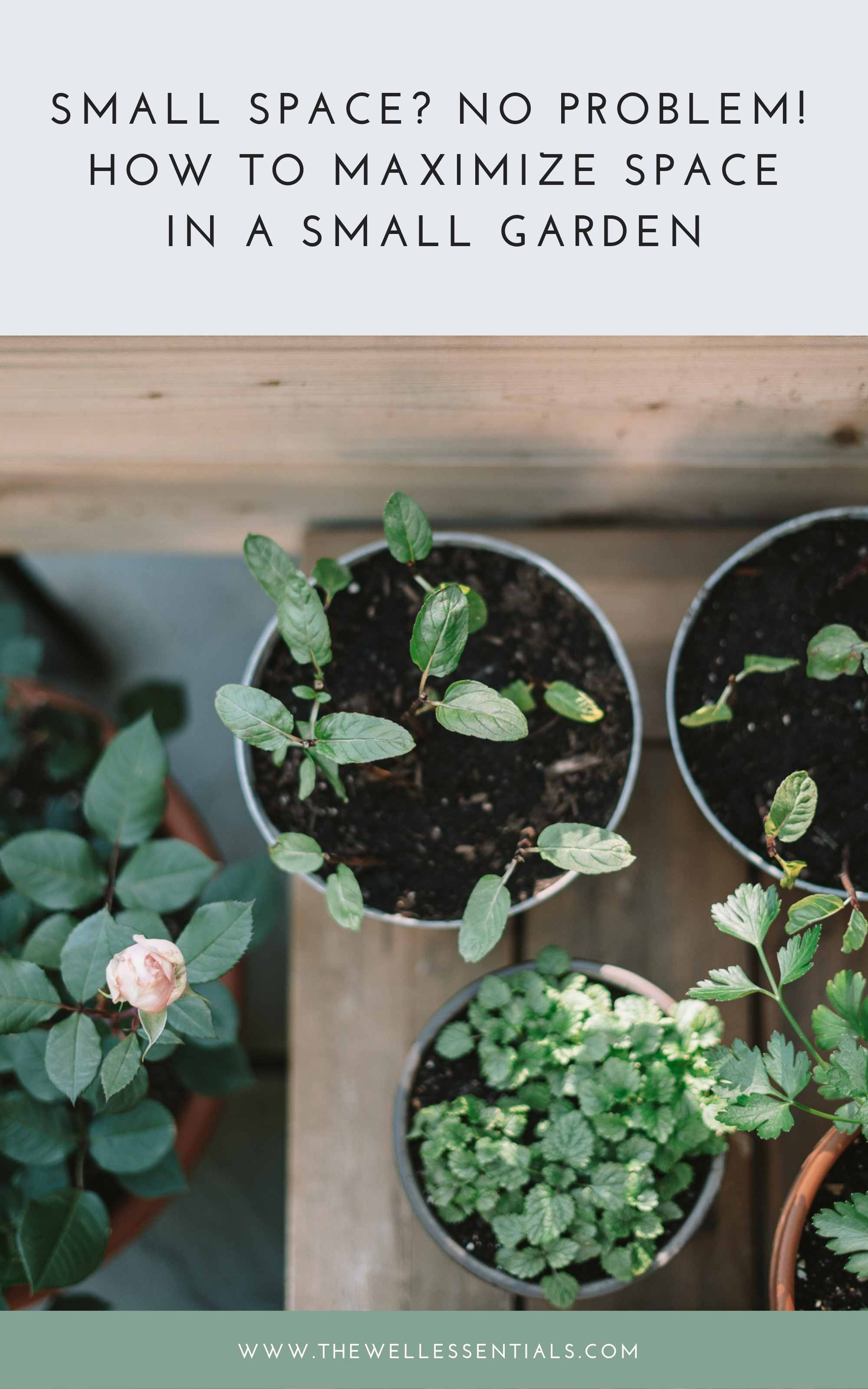 How To Maximize Space (And Grow More!) With Small Space Gardening