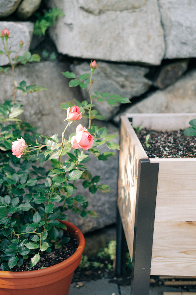 8 Steps To Planning Your Best Summer Garden + What We Are Growing!