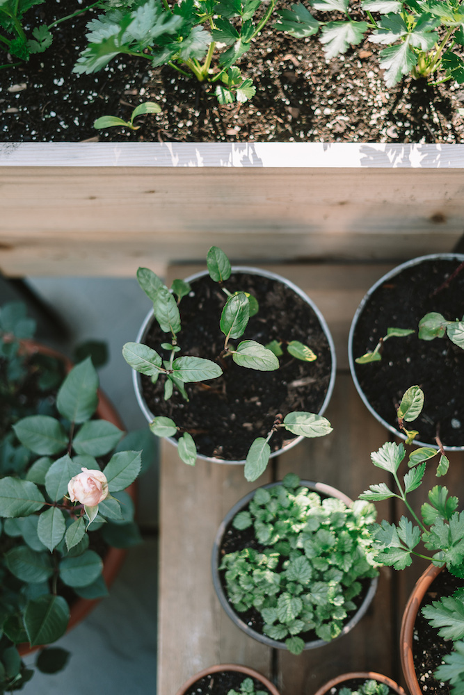 Small Vegetable Garden Ideas For Growing Food In Small Spaces