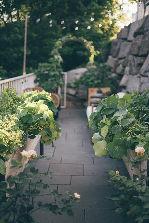 The Beginners Garden Course