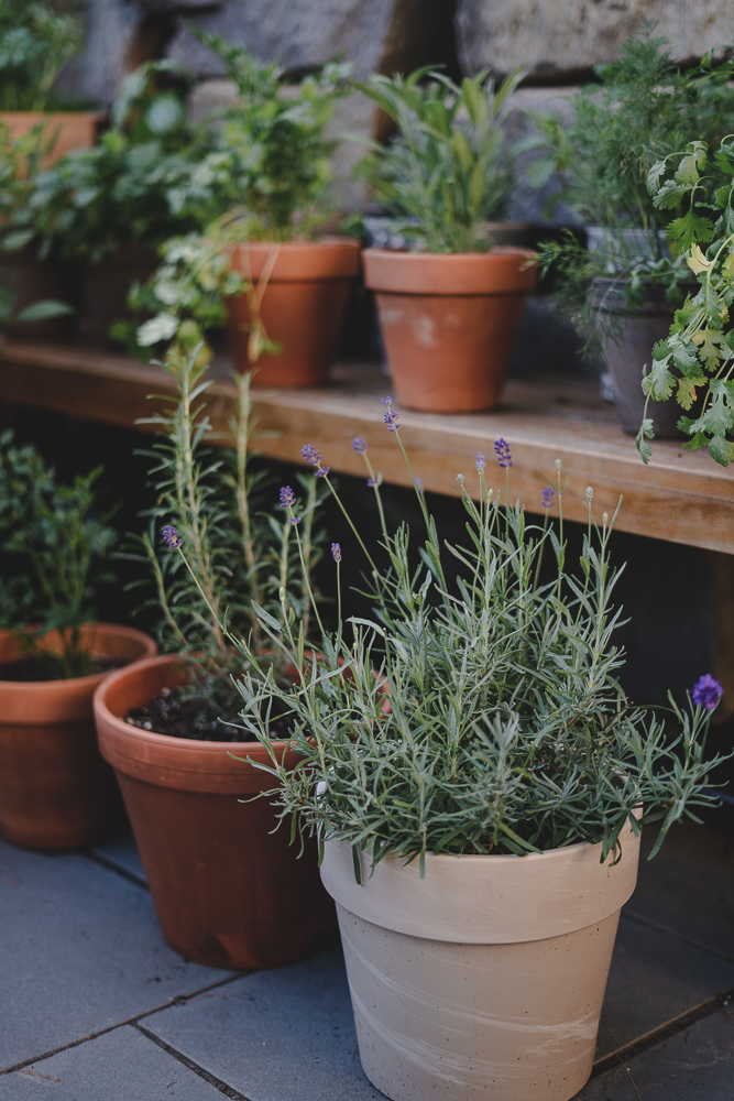 The Well Essentials & The BEST Guide To Container Gardening (Everything You Need ...