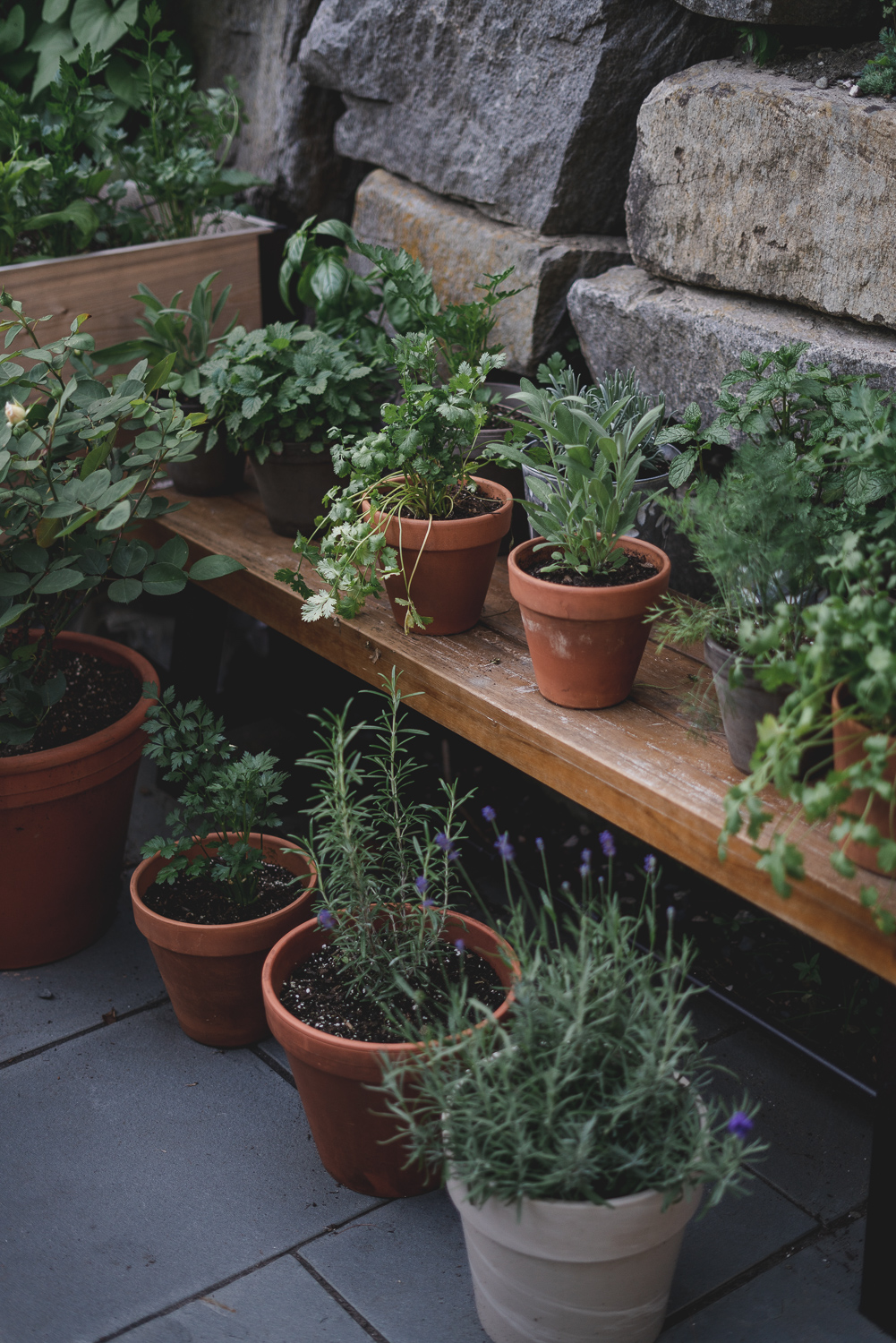 The BEST Beginners Guide To Container Gardening (Everything You Need To Get Started)