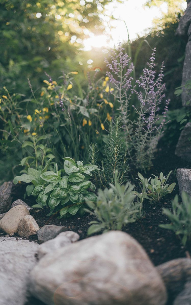 8 Beautiful Plants To Help Repel Mosquitoes In Your Yard