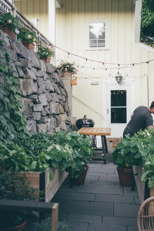 The Most Common Mistakes Beginner Gardener's Make