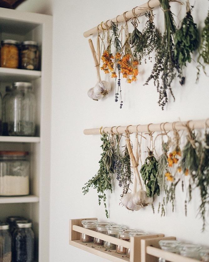 Holistic Health and Herbal Wellness