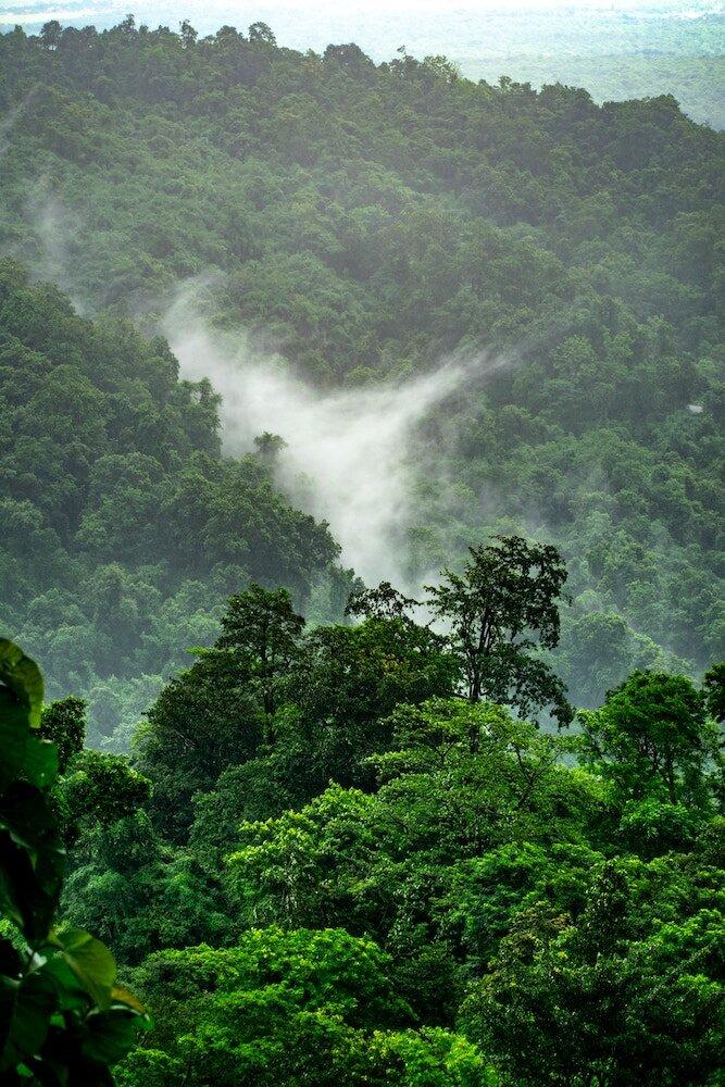 Top View Of Amazon Rainforest, Brazil Stock Photo - Image